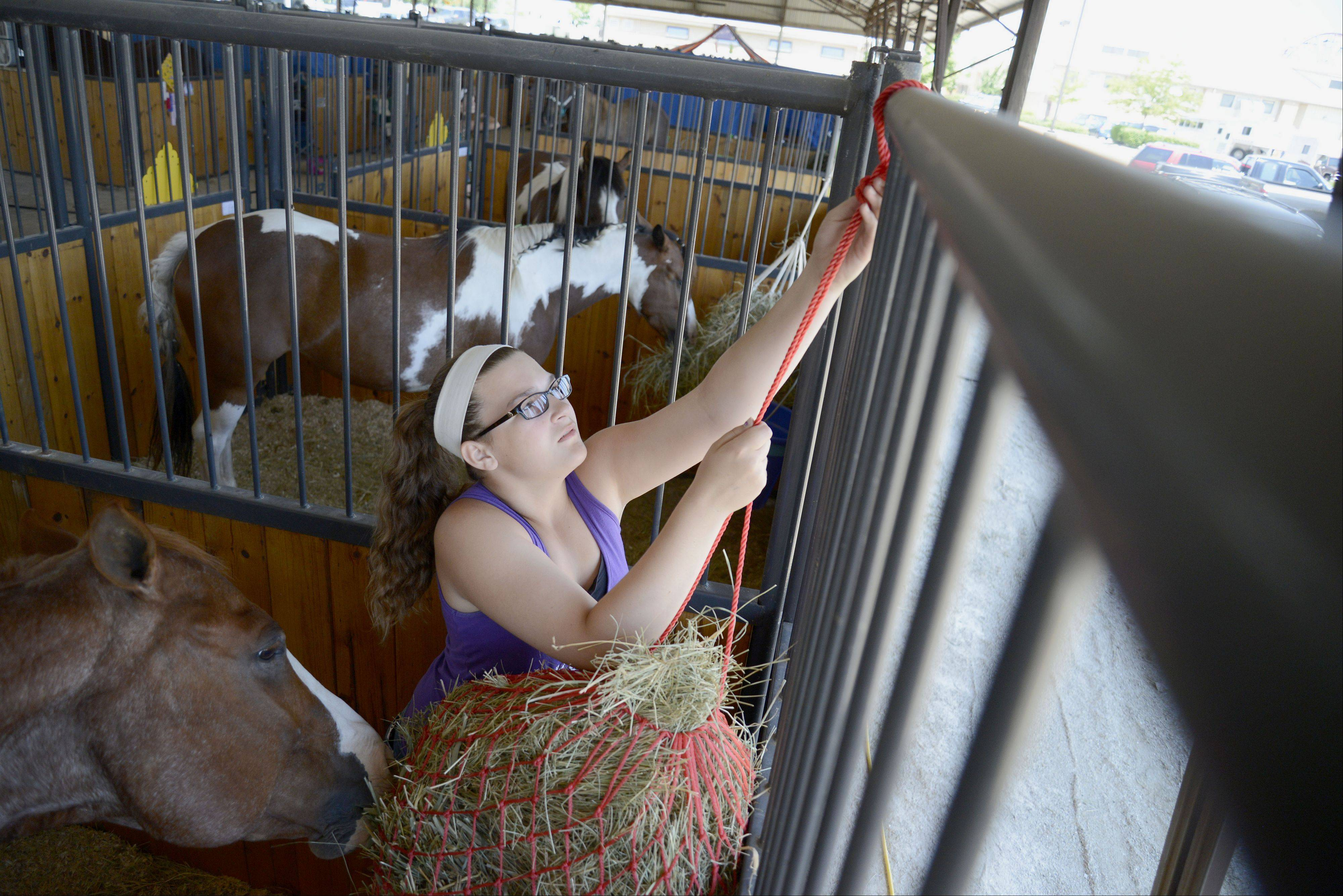 Lydia Sabanish, 12, of Cortland, hoists up a hay net for a horse named Hondo on Saturday at the Kane County Fair in St. Charles. Sabanish is a member of the Y-Not 4-H group out of Maple Park.