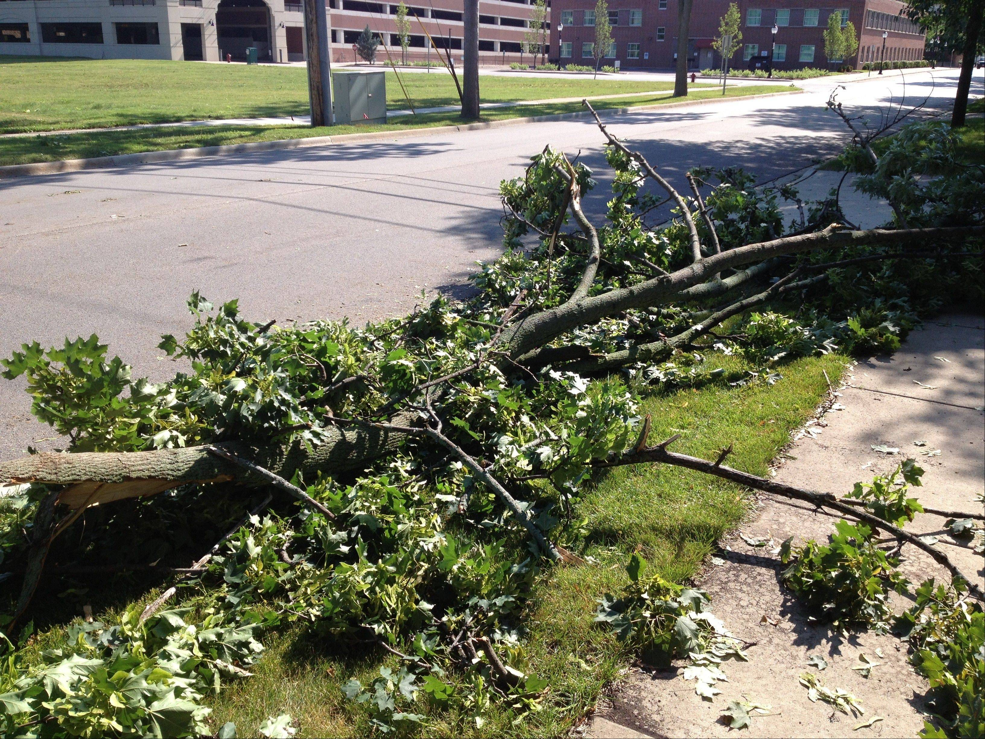 A downed tree on the 200 block of West Sigwalt was one of dozens reported Saturday morning in the aftermath of Friday's storm.