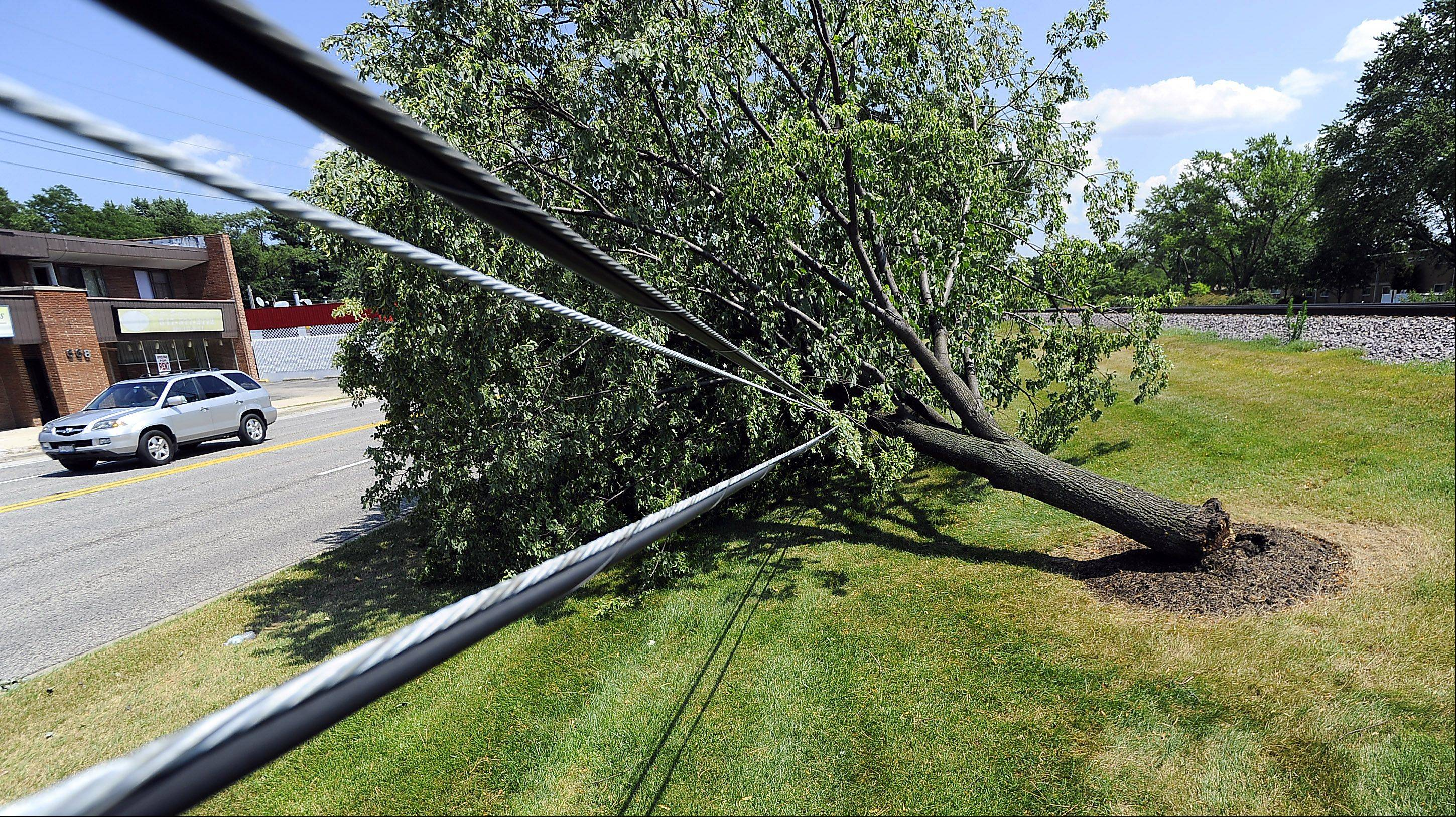 Cable wires Saturday feel the strain of a downed tree that fell along Northwest Highway in Mount Prospect during storms that swept through the Northwest suburbs on Friday.