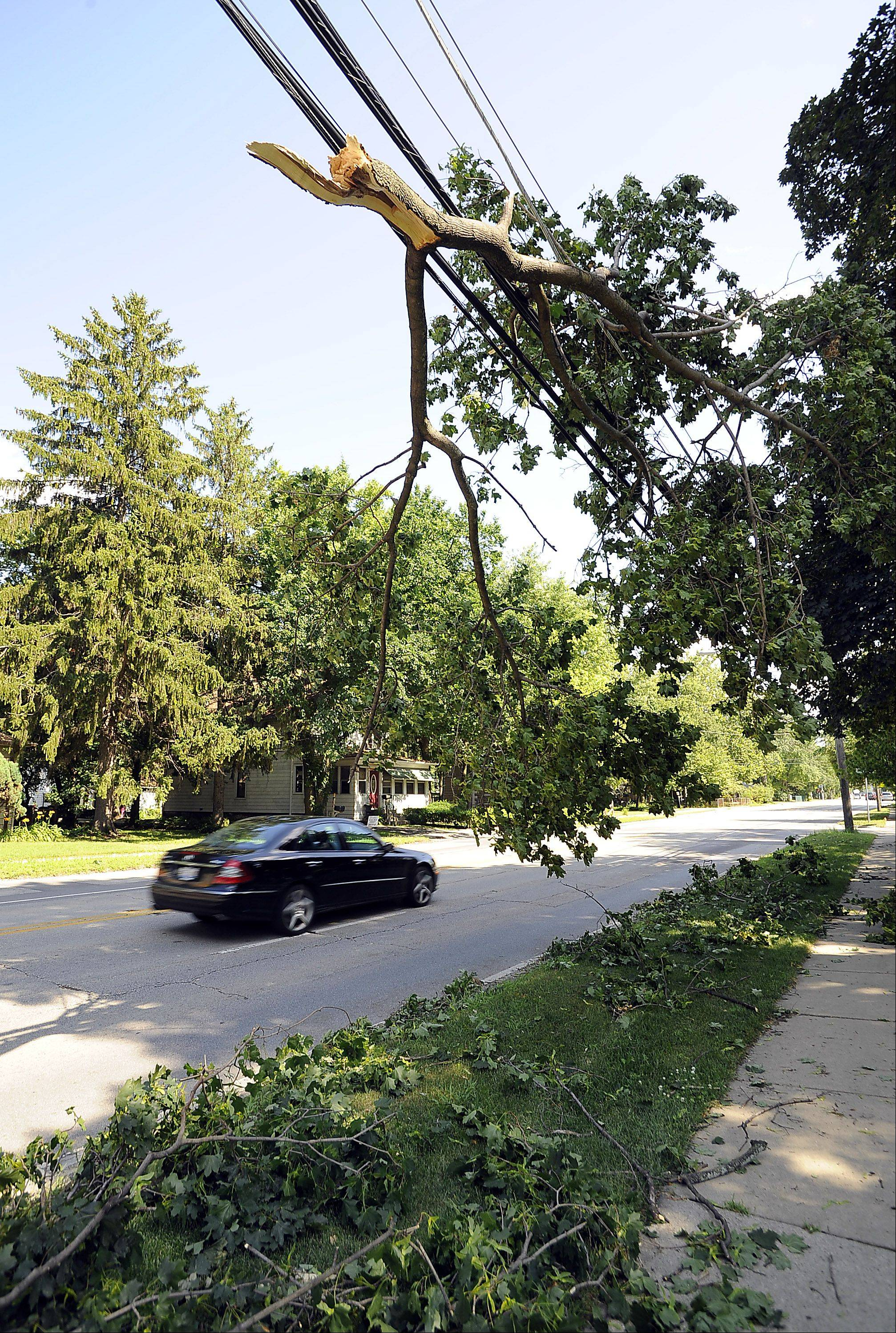 Cable wires Saturday feel the strain of tree branches that fell along River Road in Des Plaines during storms that swept through the Northwest suburbs on Friday.