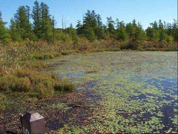 Volo Bog State Natural Area and the Friends of Volo Bog will celebrate International Bog Day Sunday, July 28.