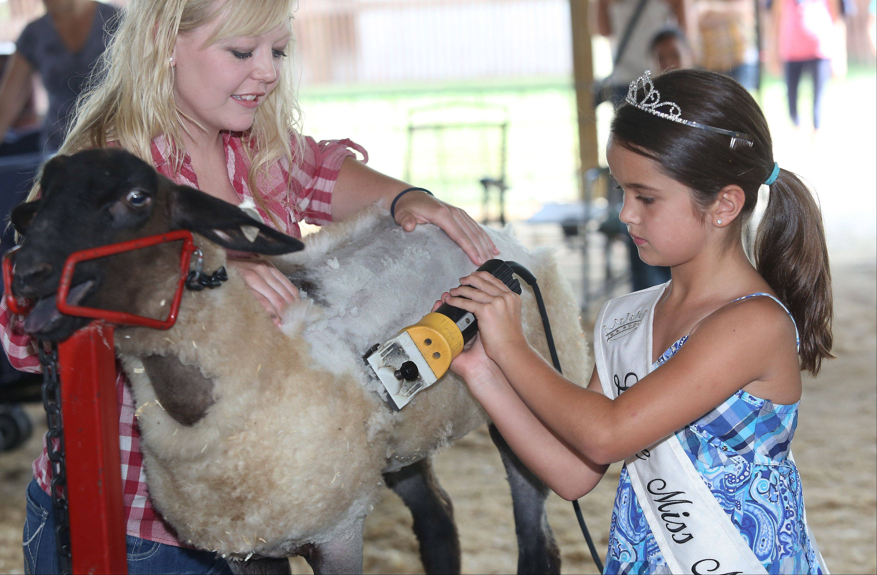 Little Miss Wauconda Kyra Ryba, 8, shears a sheep with help from Haley White of Wauconda during the Lake County Fair Thursday at the Lake County Fairgrounds in Grayslake.