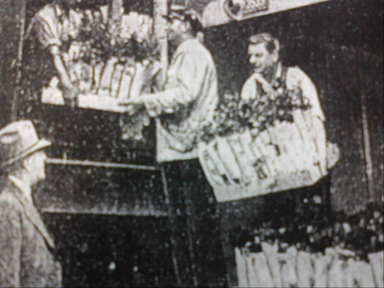 "Between World War I and World War II, Des Plaines earned its motto as the ""City of Roses."" In this 1937 photograph, Paul F. Amling, right, helps load 25,000 rosebushes on a train bound for California."