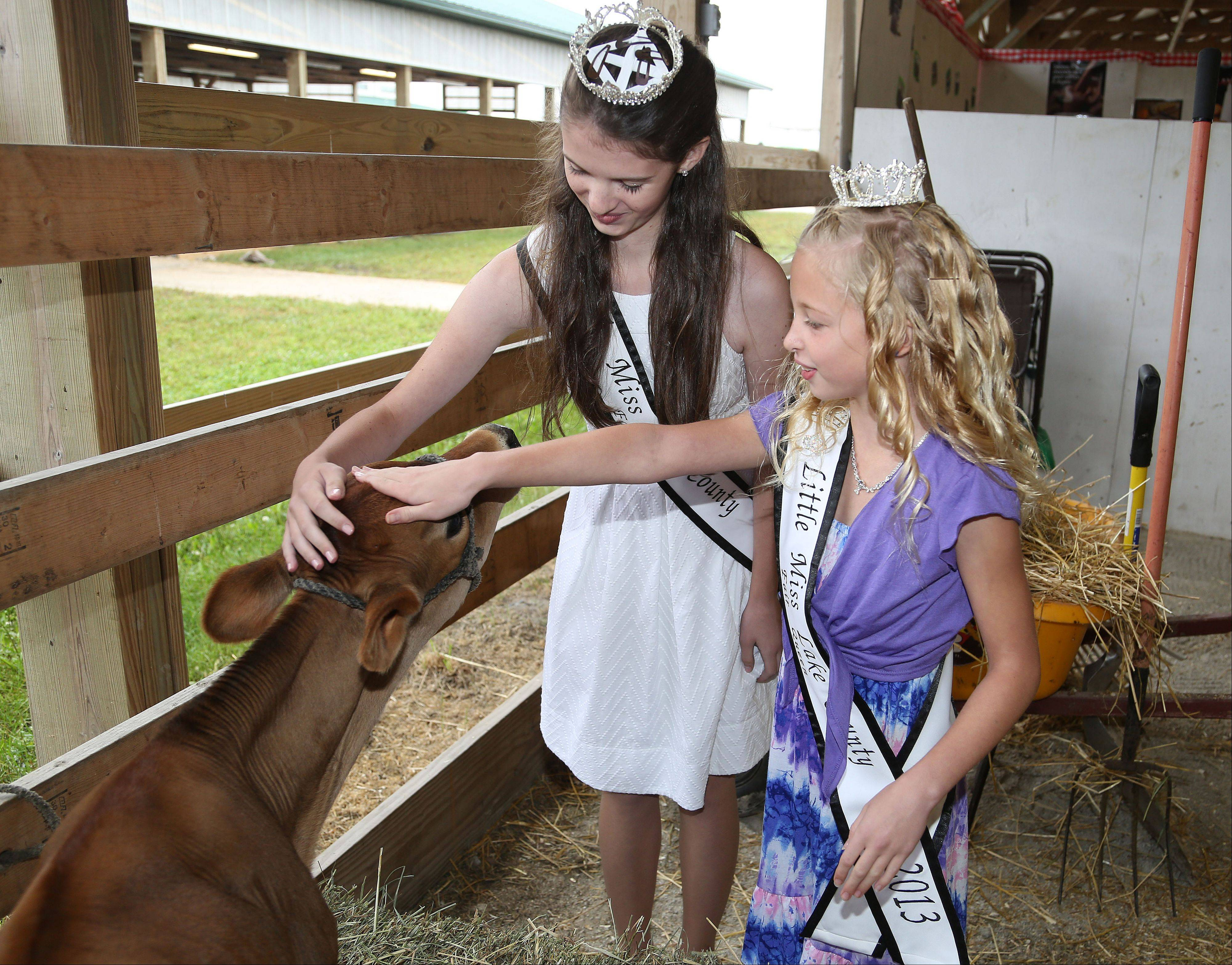 Jr. Miss Lake County Charlotte Roberts, 13, of Grayslake and Little Miss Lake County Victoria Weaver, 8, of Mundelein pet a dairy calf Friday at the Lake County Fair in Grayslake.