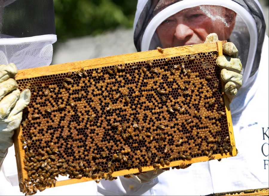 Lawrence DuBose takes a closer look at a beehive.