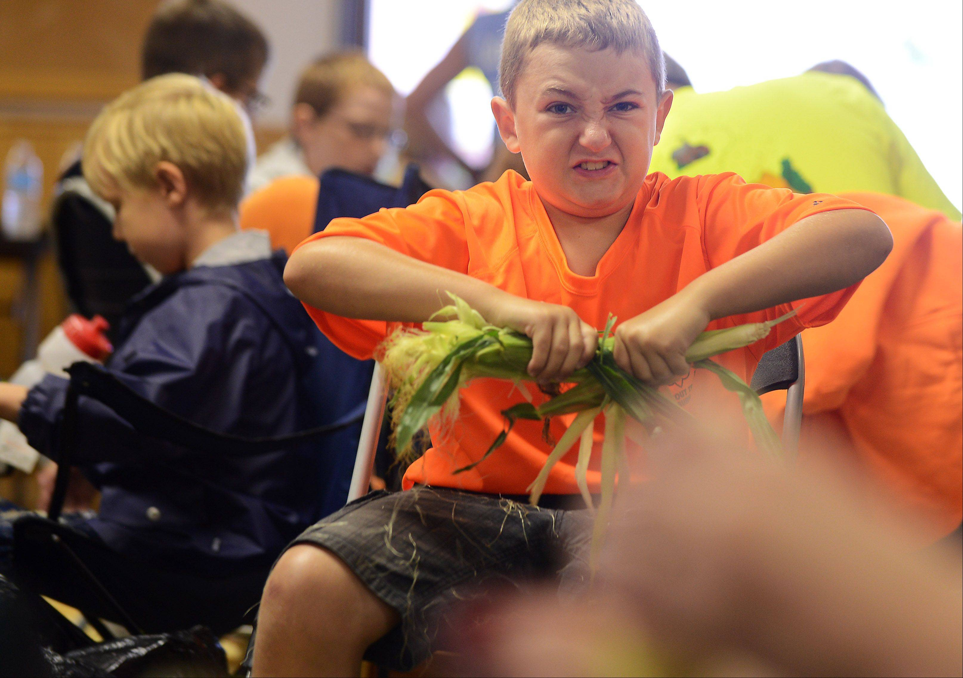 Parker LaSalle, 11, of Elburn, gives it his all as he joins a roomful of volunteers to shuck corn in preparation Friday for the annual Sugar Grove Corn Boil. About 9,000 ears of corn were shucked by over 100 volunteers Friday and Saturday.