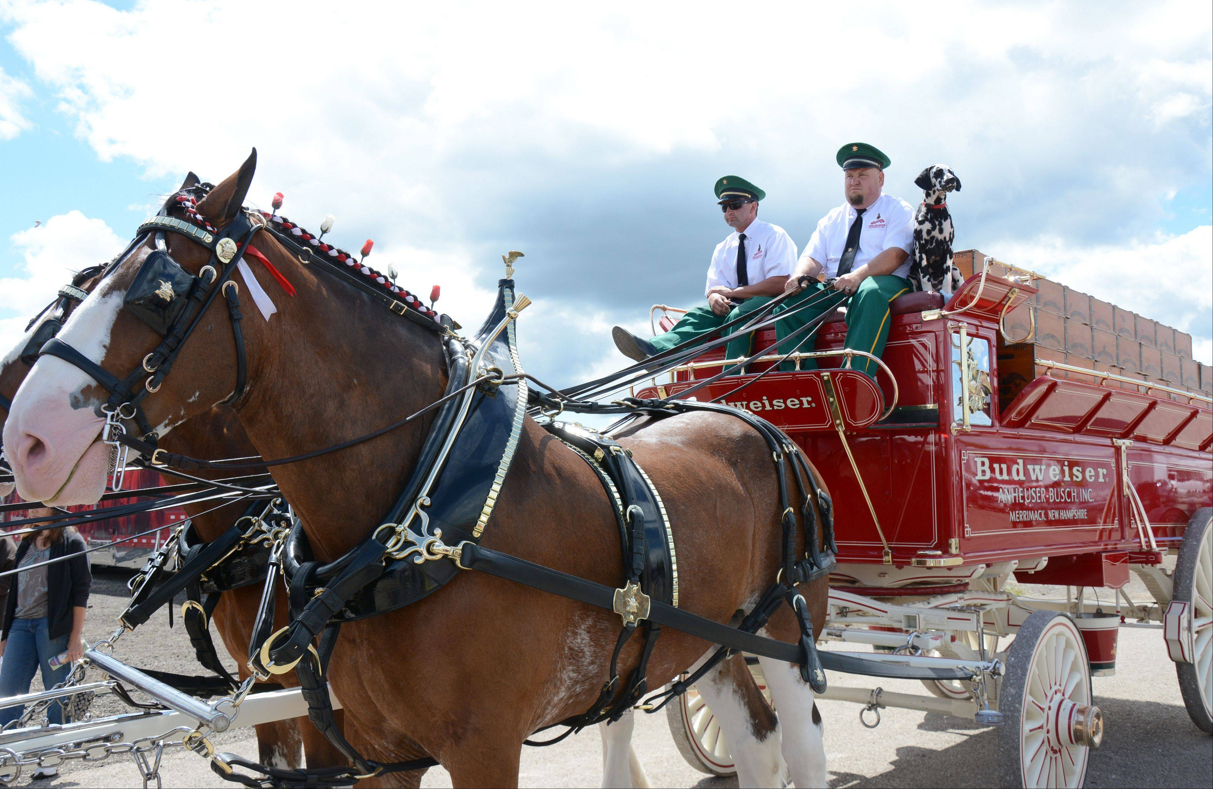 From left, John Nisle, John Clark and Clyde drive the Budweiser Clydesdales at the Lake County Fair Sunday, July 28.