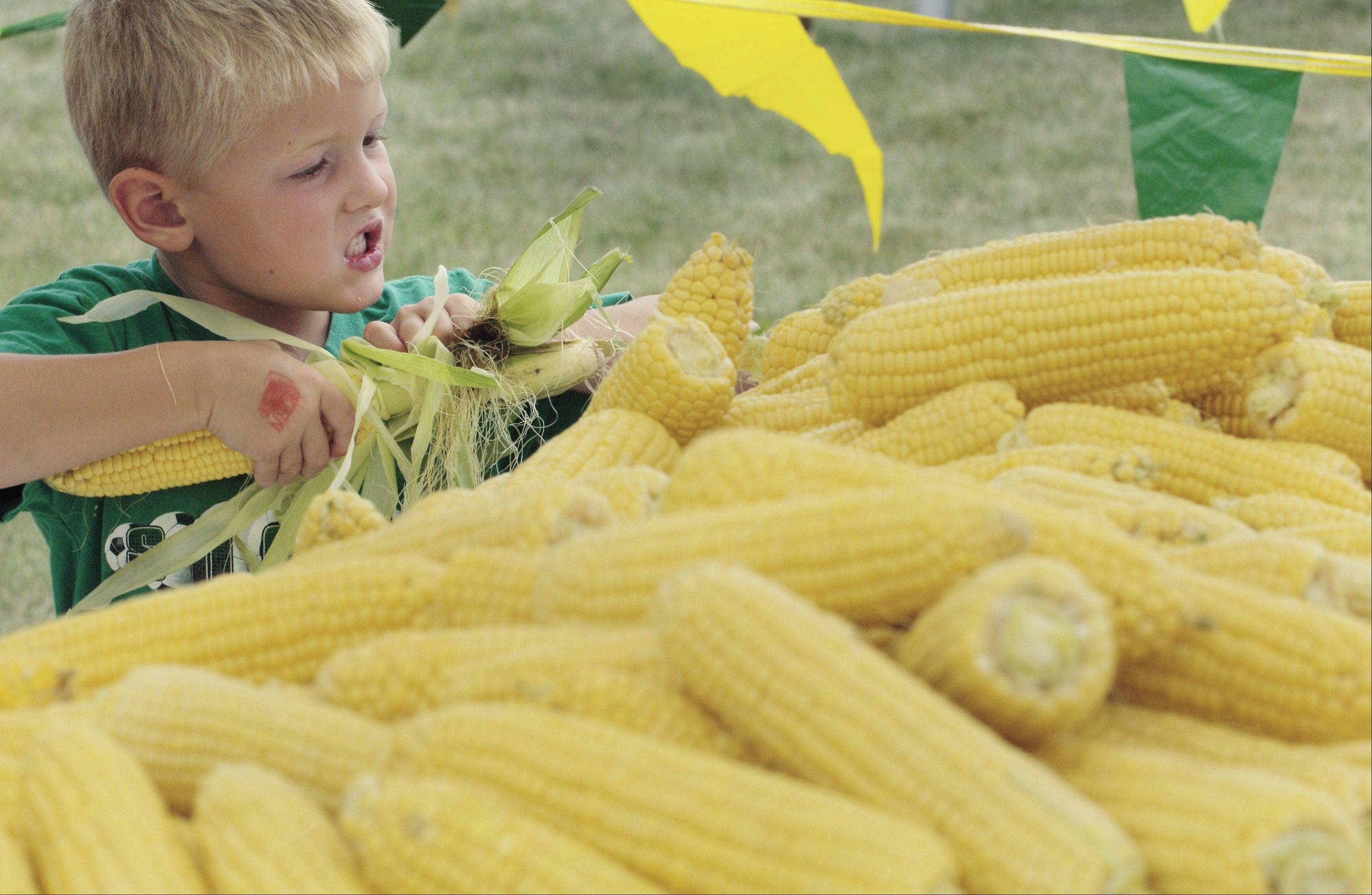 A boy helps husk one of nearly 14,000 ears of corn to the 2007 Cornfest at Community Church of Rolling Meadows.