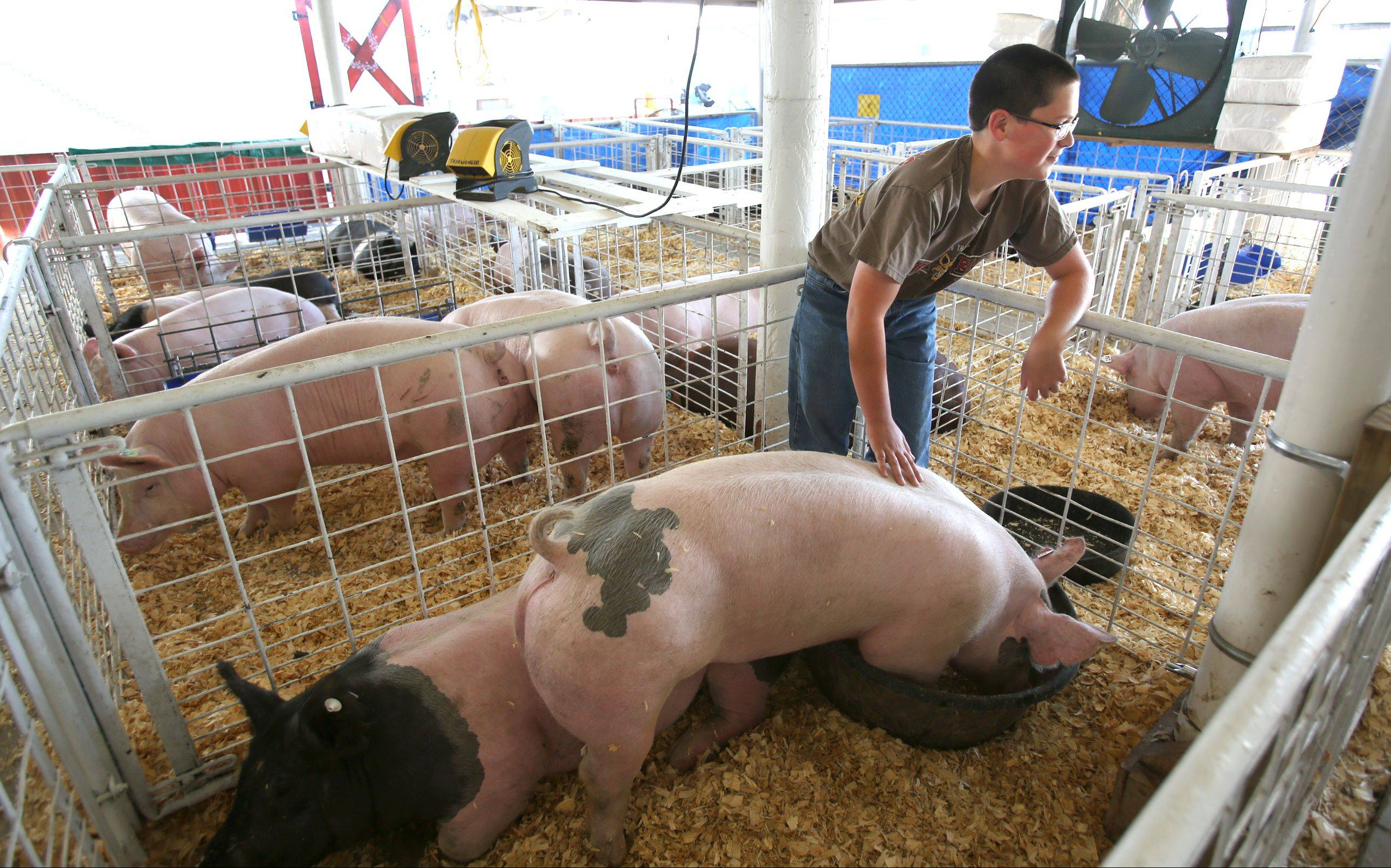 Two groups are being formed to study the future of the DuPage County Fair and whether it should be moved from the fairgrounds in Wheaton.