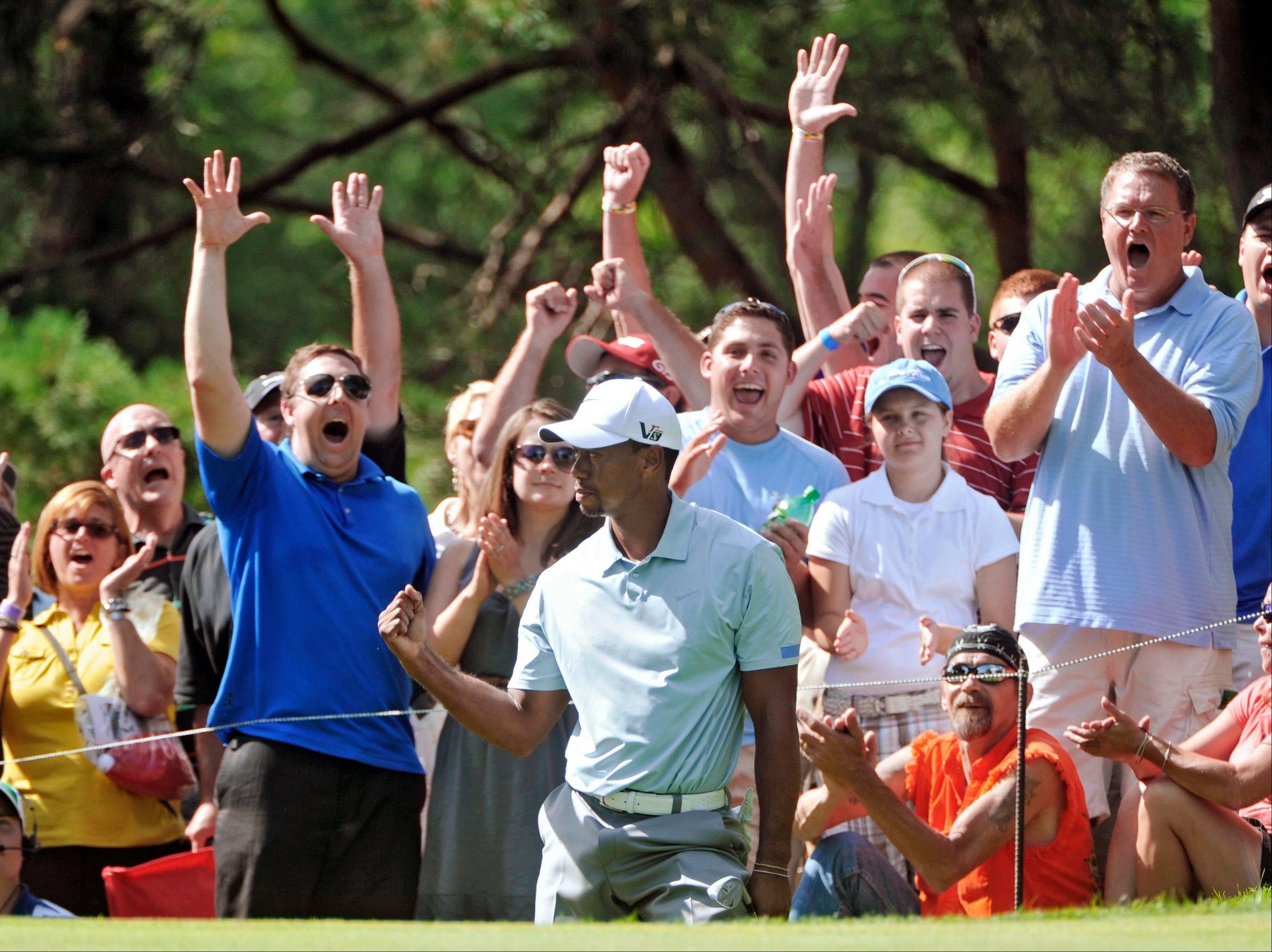Fans celebrate with Tiger Woods, center, after Woods chipped in for birdie from off the 13th green during the third round of the Bridgestone Invitational golf tournament, Saturday, Aug. 3, 2013, at Firestone Country Club in Akron, Ohio. Woods leads the tournament by seven shots at 15-under par.