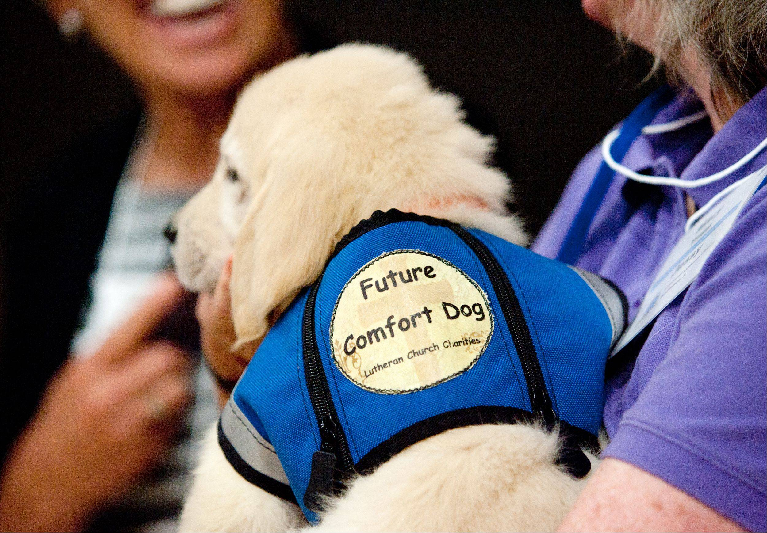 Mary Trapp of Villa Park holds 10-week-old comfort dog Shiloh during the annual meeting for the K-9 Comfort Dog Ministry held this year at the Trinity Lutheran Church in Roselle.