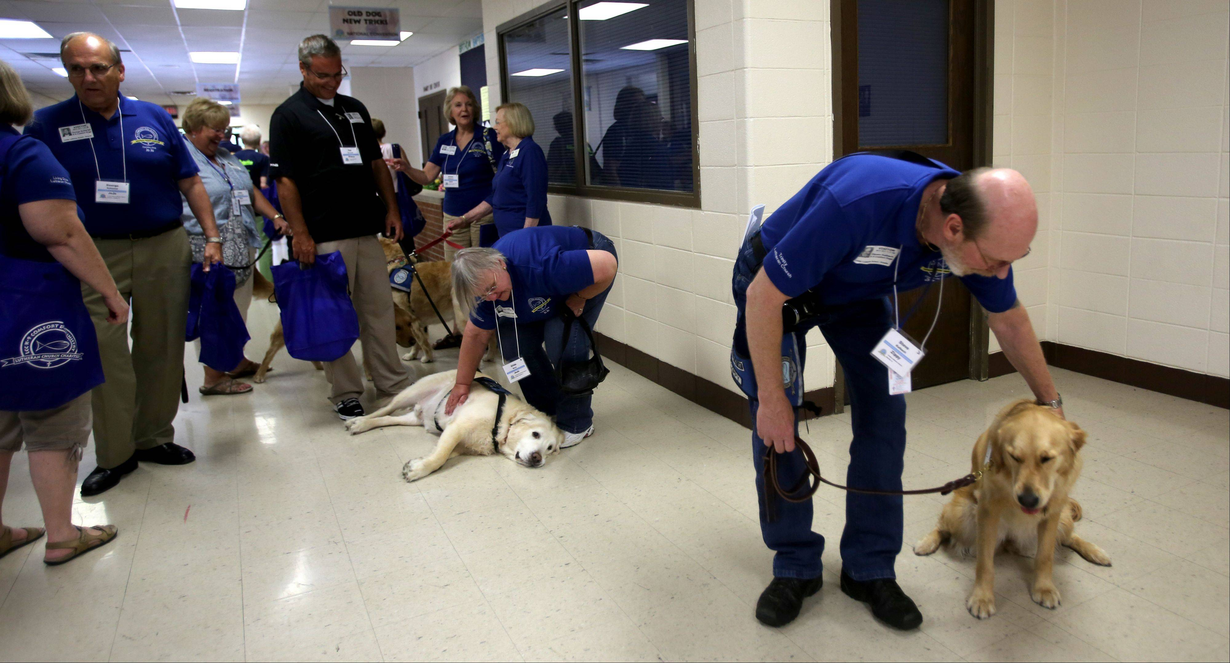Steve Kalbach of Hanover Park, right, pets Zippy as other comfort dogs participate in the annual for the K-9 Comfort Dog Ministry gathering held this year at the Trinity Lutheran Church in Roselle.