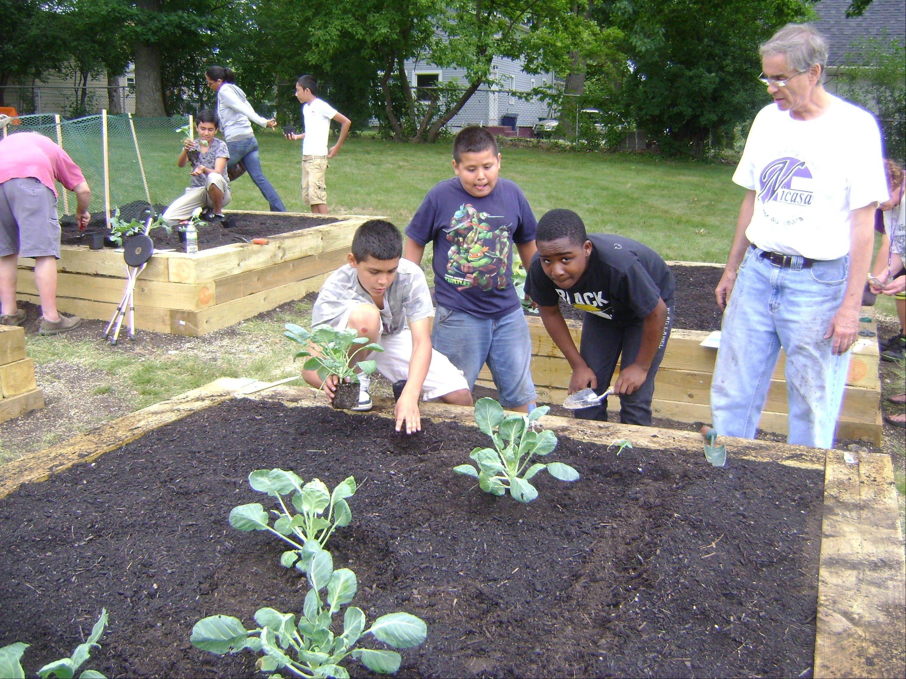 Youth from Nicasa's Teen REACH After School Program plant Brussels sprouts in Tricia's Garden.