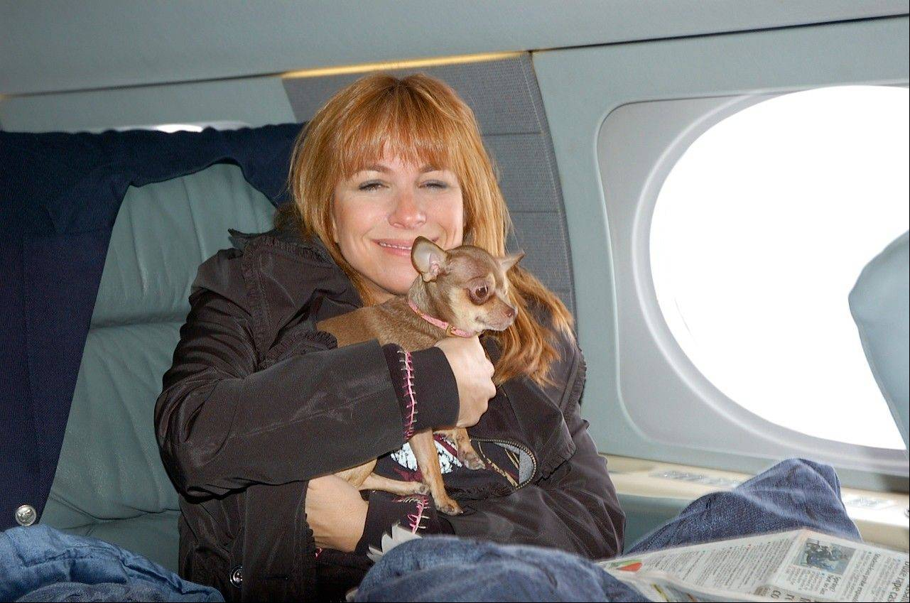 """The Real Housewives of New York City"" actress Jill Zarin, aboard a private jet with her Chihuahua, Ginger in New York on their way to Los Angeles. Zarin had to take a cross-country business trip but 9-year-old dog Ginger was sick. She couldn't leave the 7-pound dog behind, so she hired a vet to go with them."