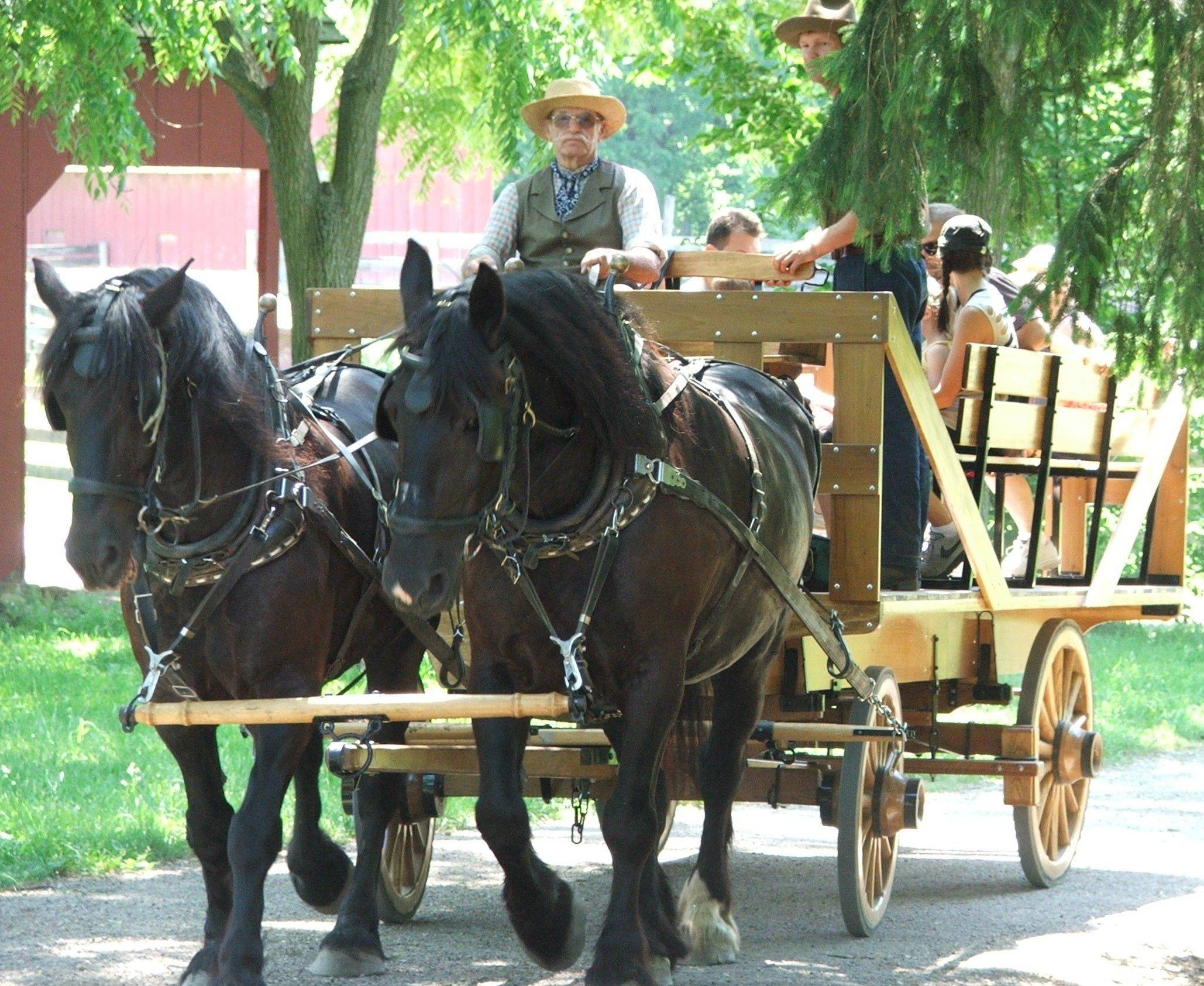 Chuck Henry drove the horse-drawn wagon at Heritage Farm in Schaumburg but also worked out the horses to keep them in shape.