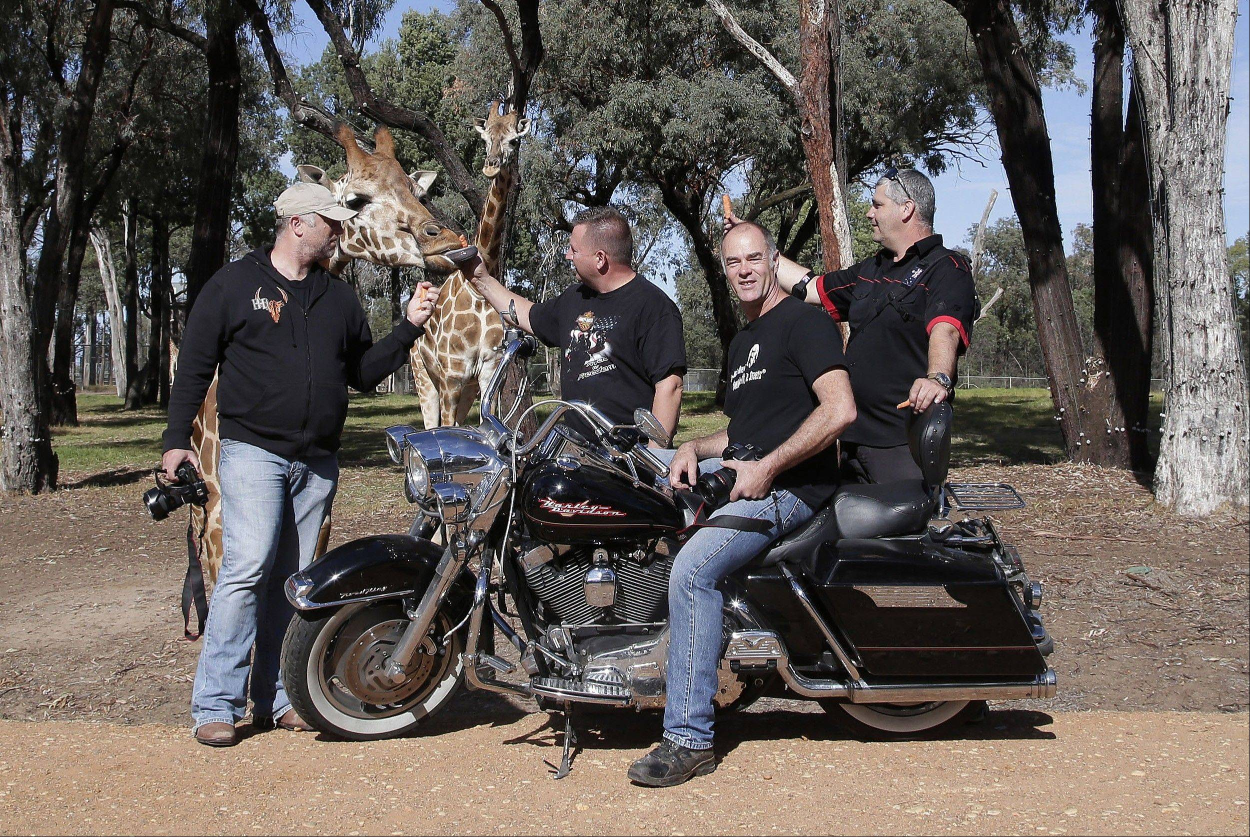 Motorcycle tourists, from left, Stefan Hersee, Glenn Nicholls, John Roe and Rob Griffith feed giraffes at Taronga Western Plains Zoo in Dubbo.