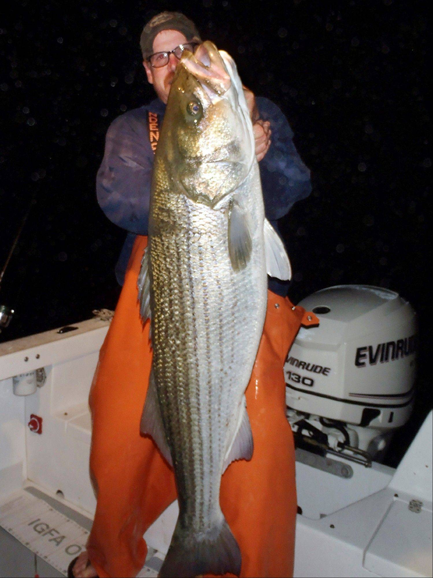 Greg Myerson, of North Branford, Conn., shows one of the record striped bass he caught off the Connecticut coast. Myerson consistently catches striped bass 50 pounds and much larger by methodically studying his prey and developing devices to lure the fish to him.