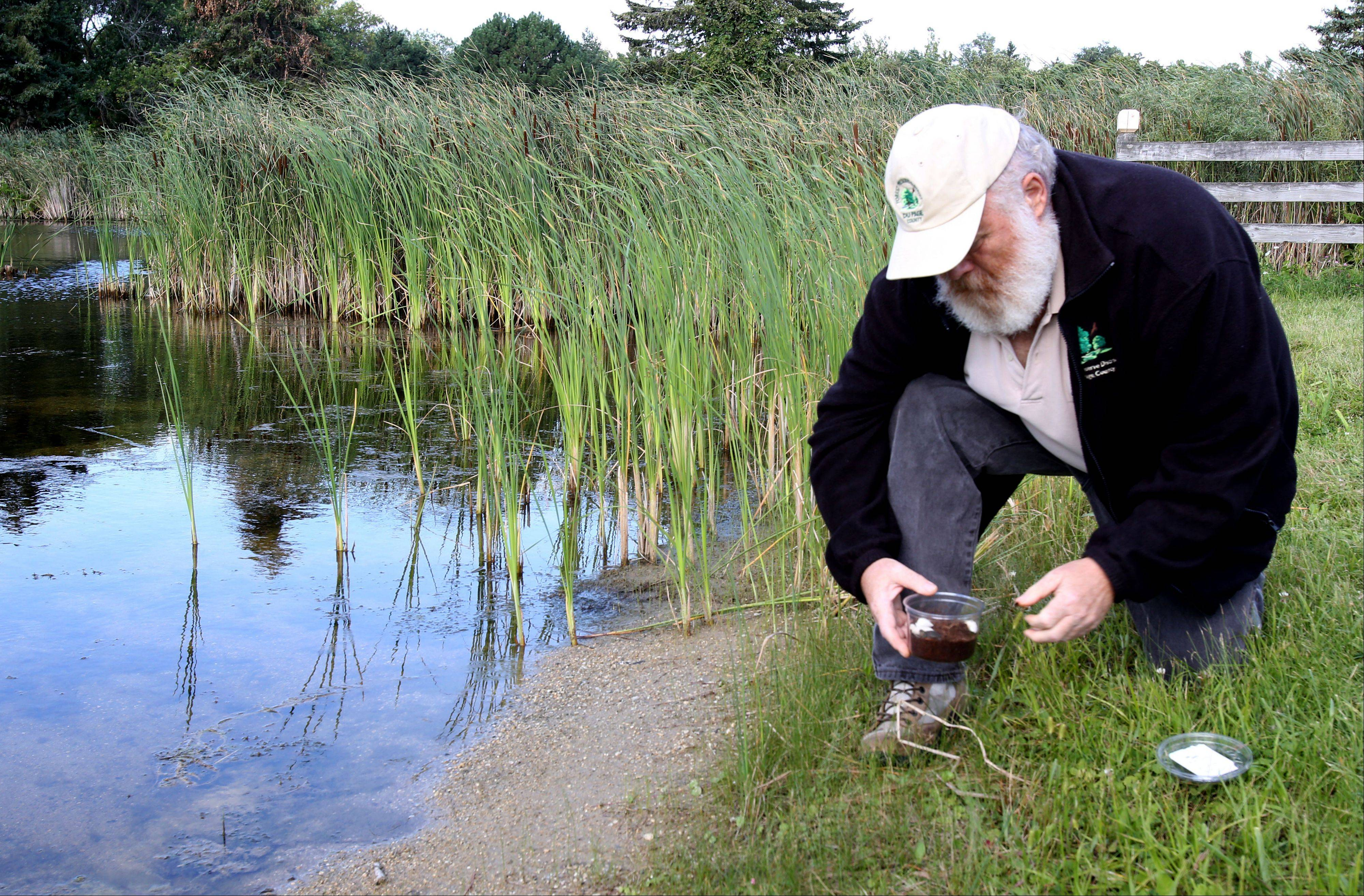 Naturalist Kevin Luby releases seven midland painted turtles Tuesday at a DuPage County forest preserve.