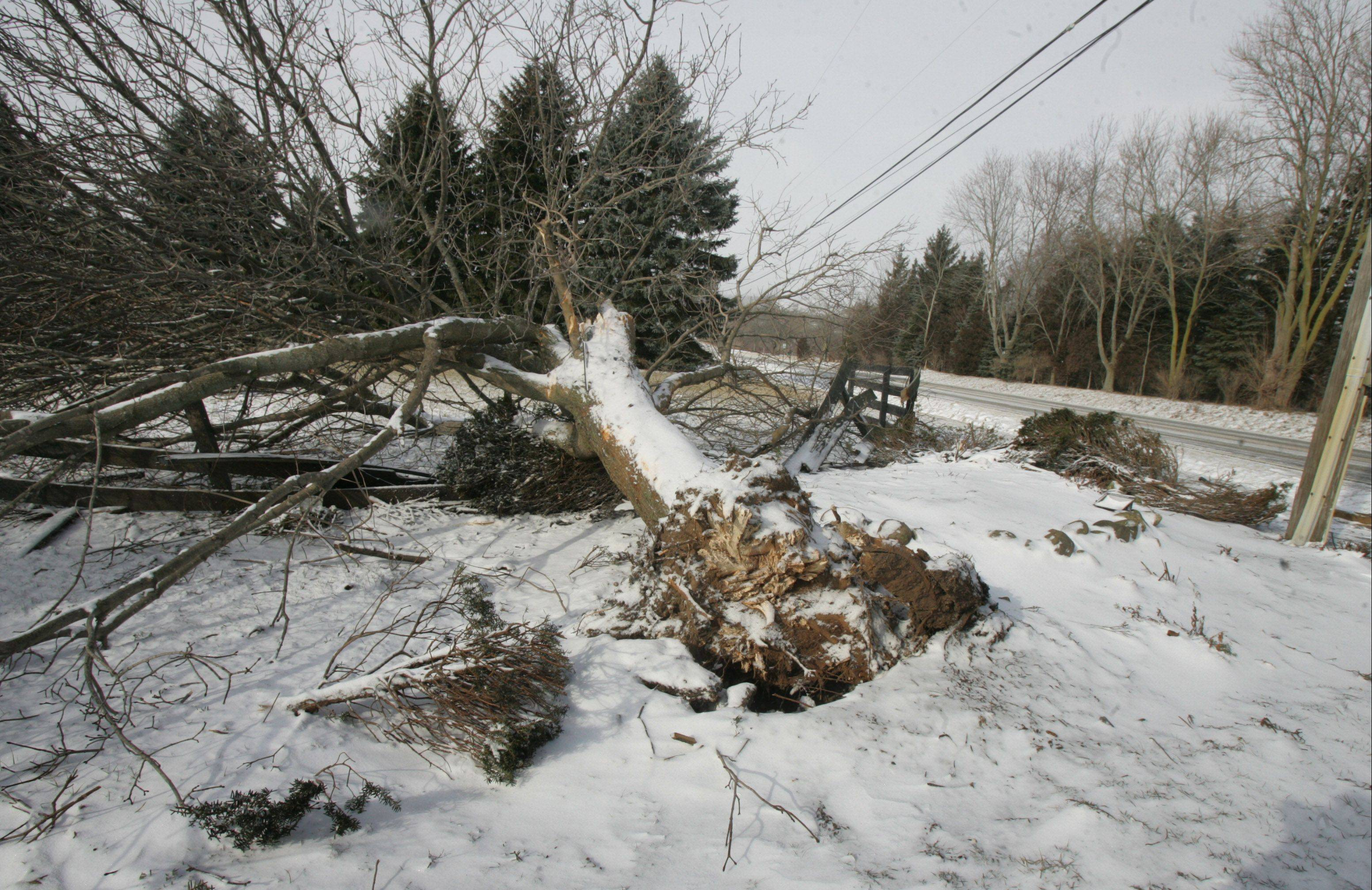 Joel Wittkamp crashed into this tree in Antioch Township in February.