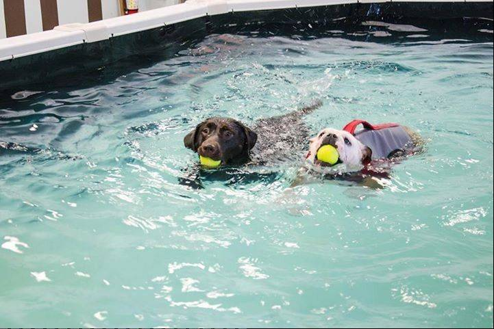 Dogs can cool off in the pool at the Dogstravaganza! Festival at Tail Gate in Elmhurst.