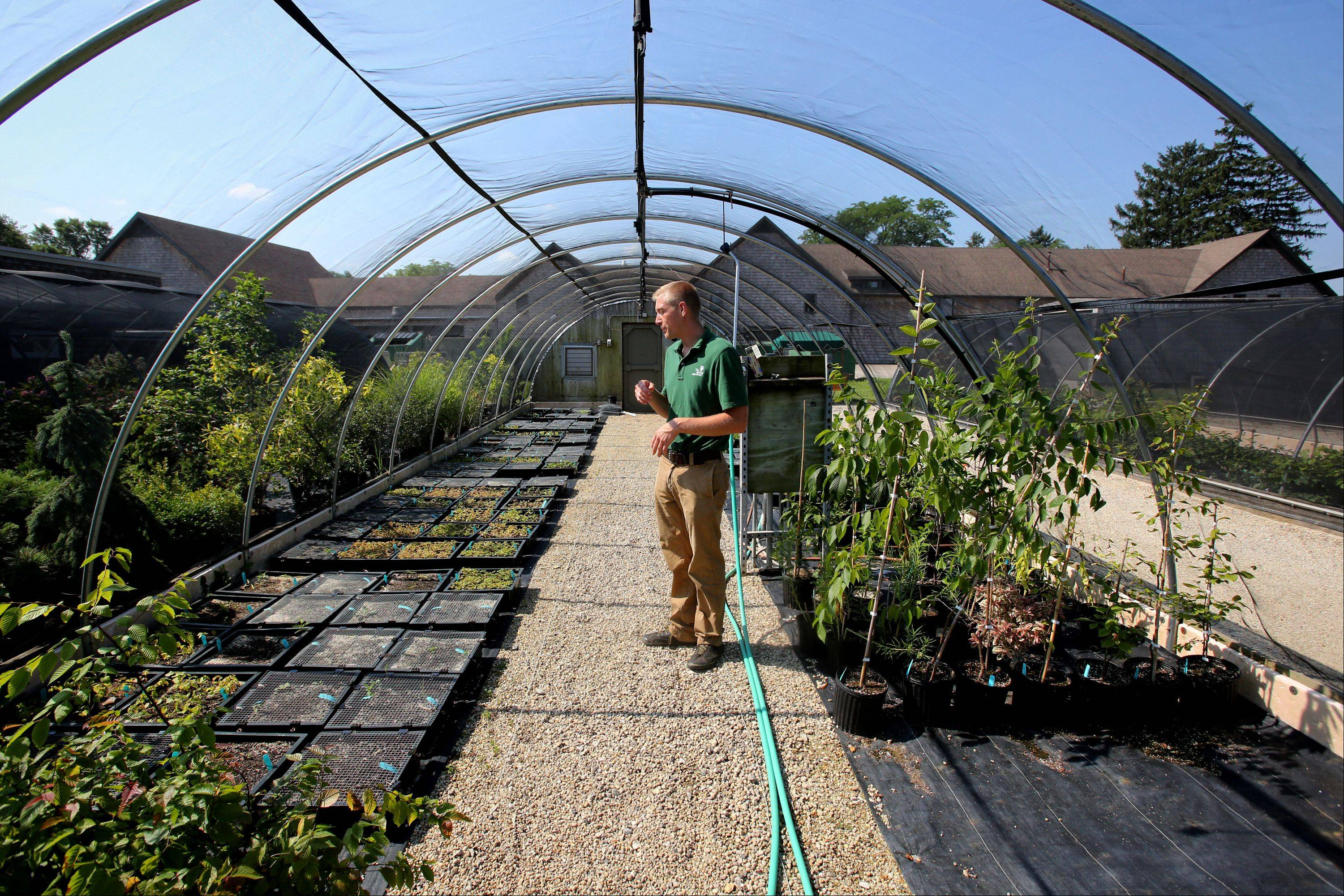 Joe Rothleutner inspects various small trees and shrubs.