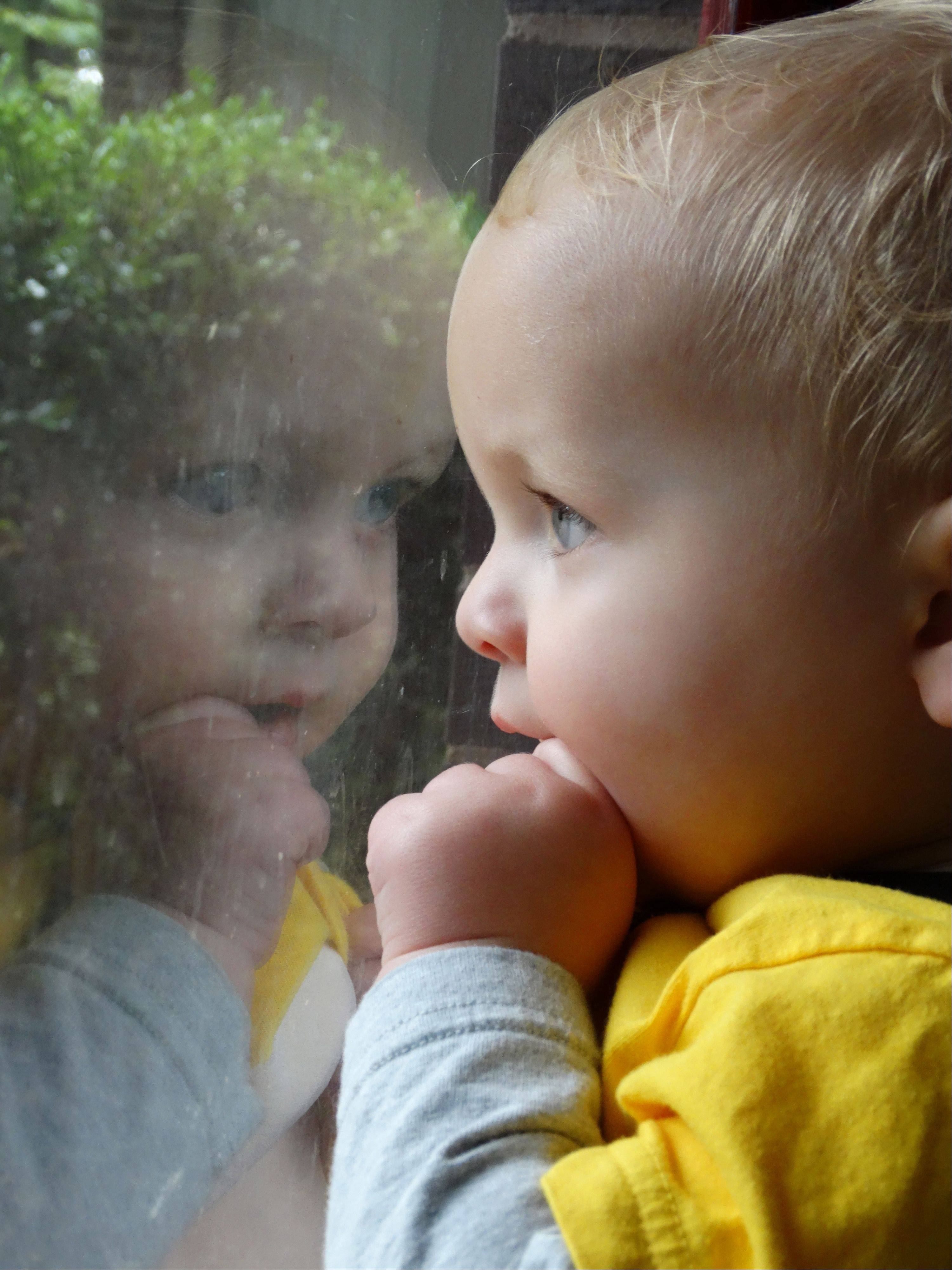 Fourteen-month-old Zachary Krandel watches dogs play in the front yard as his reflection is caught in the window.