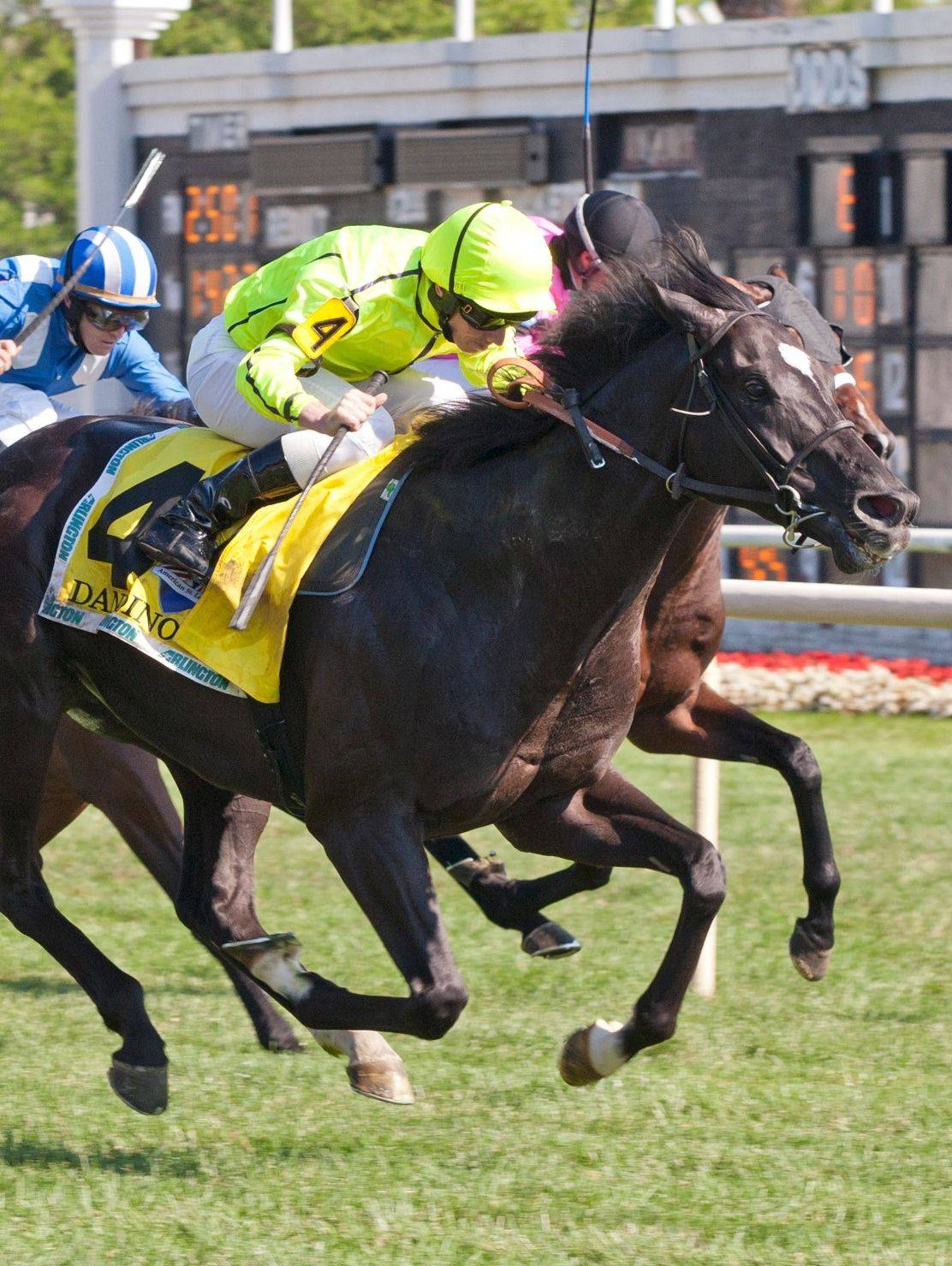 "Dandino gets to the finish line first and wins the American St. Leger at Arlington Park on Saturday. ""I was locked in the whole race, but he was the best horse,"" said jockey Ryan Moore."