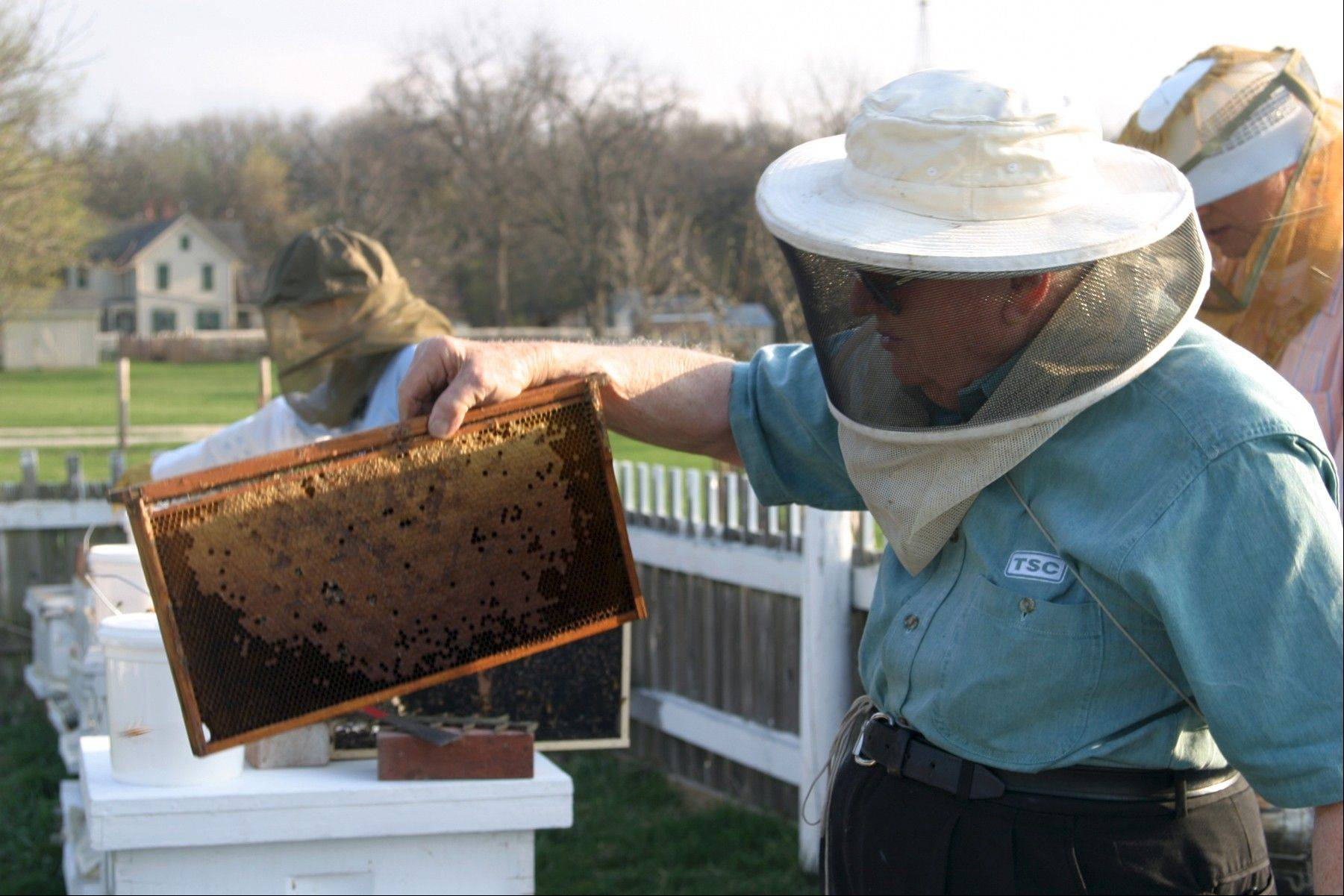 "Celebrate National Honeybee Day at the ""Beekeeping: How to Get Started"" open house at Kline Creek Farm."