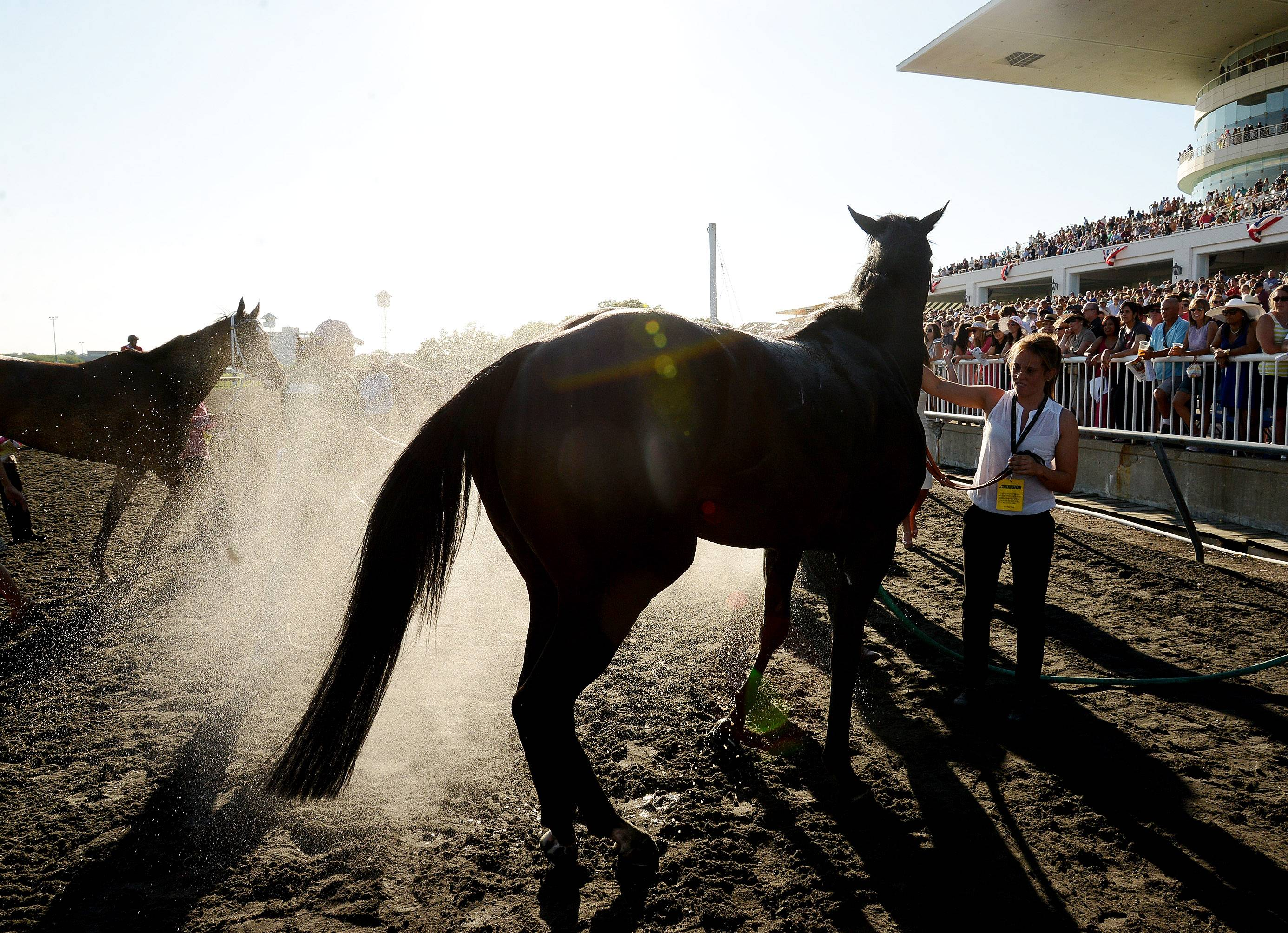 A horse gets hosed down after the Arlington Million during the Arlington International Festival of Racing at Arlington International Racecourse.