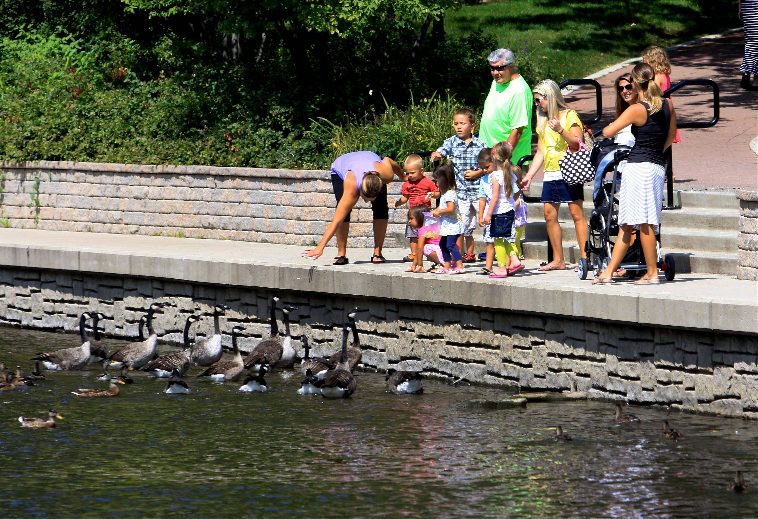 A group of people feeds the ducks and geese along the Riverwalk in Naperville. Officials have started handing out cards asking people not to feed the wildlife for the sake of both the animals and the river.
