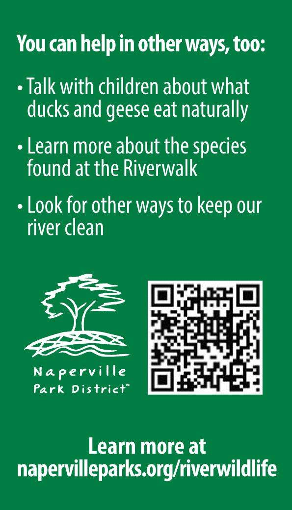 The back of the card encourages parents to teach children about the foods ducks and geese eat naturally and provides a QR code for people to learn more.