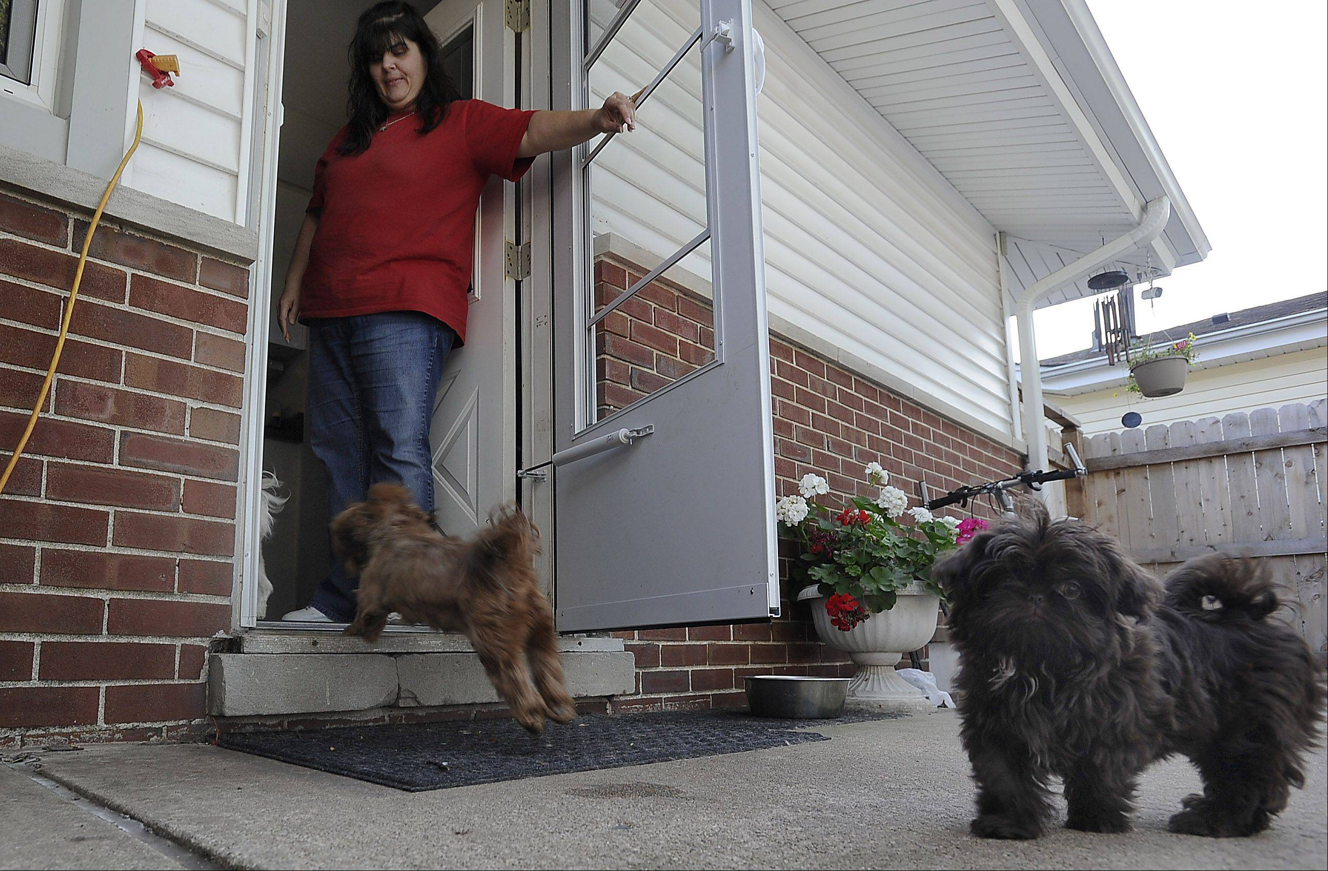 Cindy Weik of Elk Grove Village lets her dogs into the house where she breeds them. A neighbor's complaint has landed Weik in court.