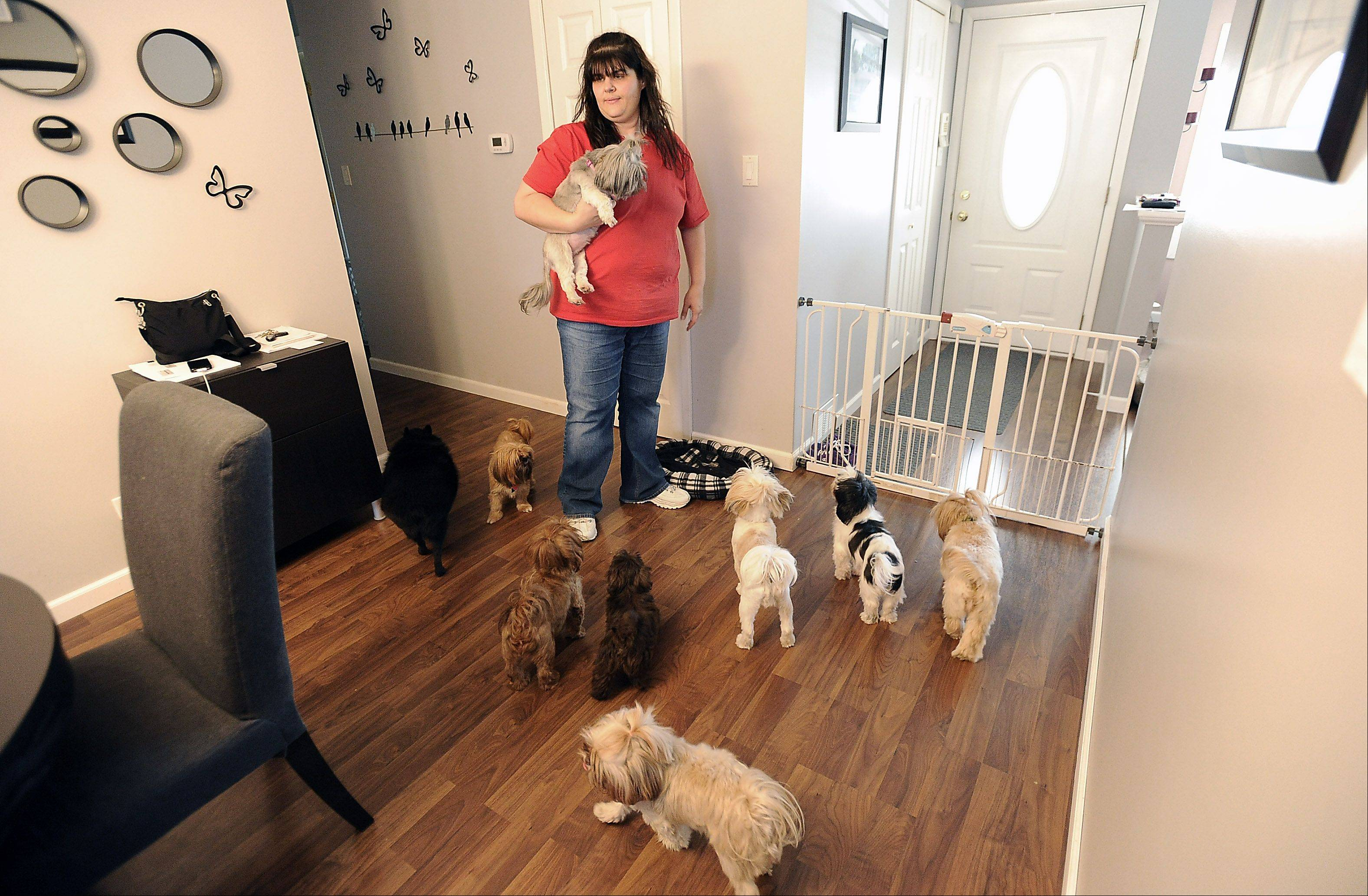 Cindy Weik inside her Elk Grove Village home where she and her husband Kent breed Shih Tzus, leading to the village taking legal action against them.
