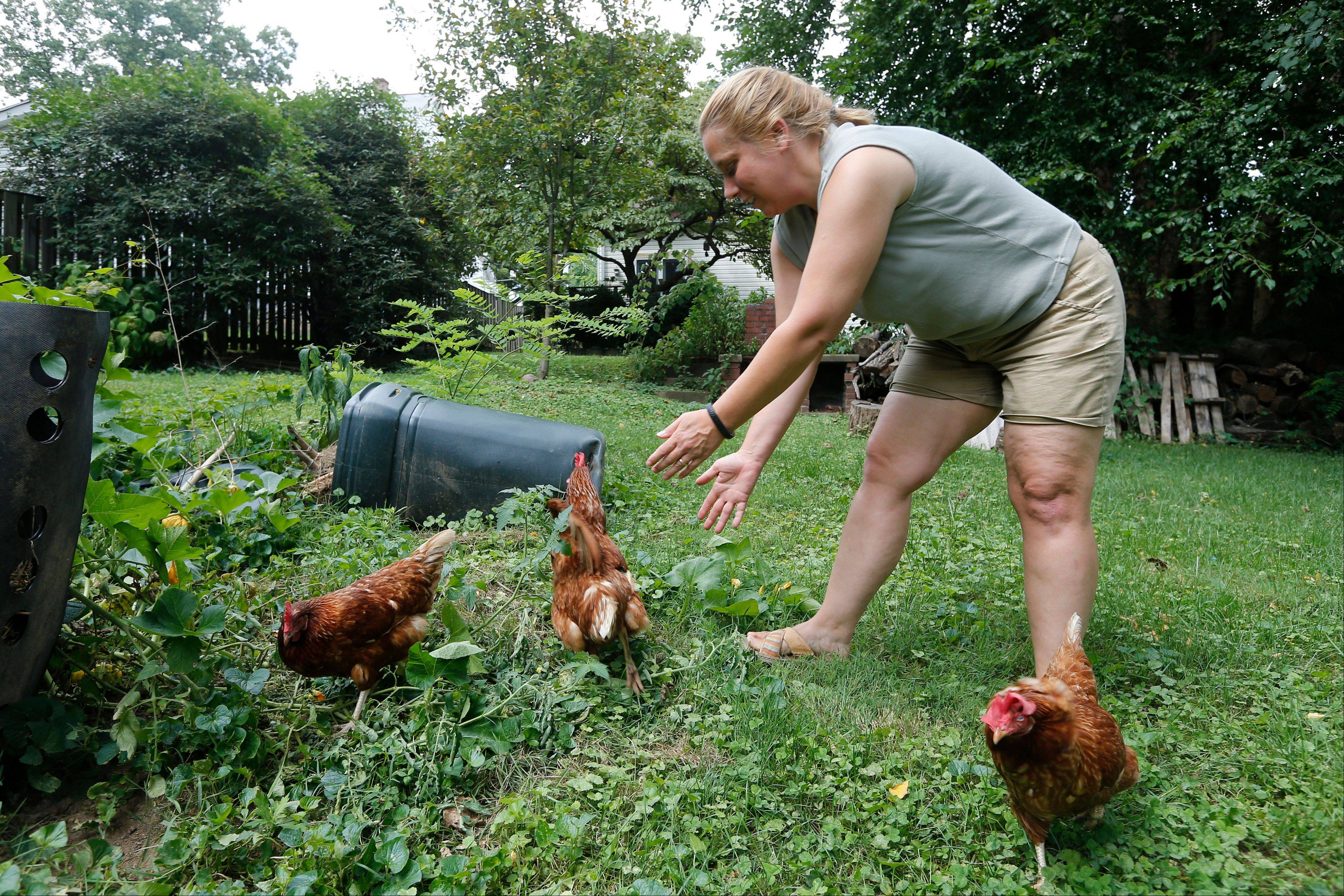 Sandy Schmidt, who owns a portable chicken coop, rounds up her chickens at her home in Silver Spring, Md.