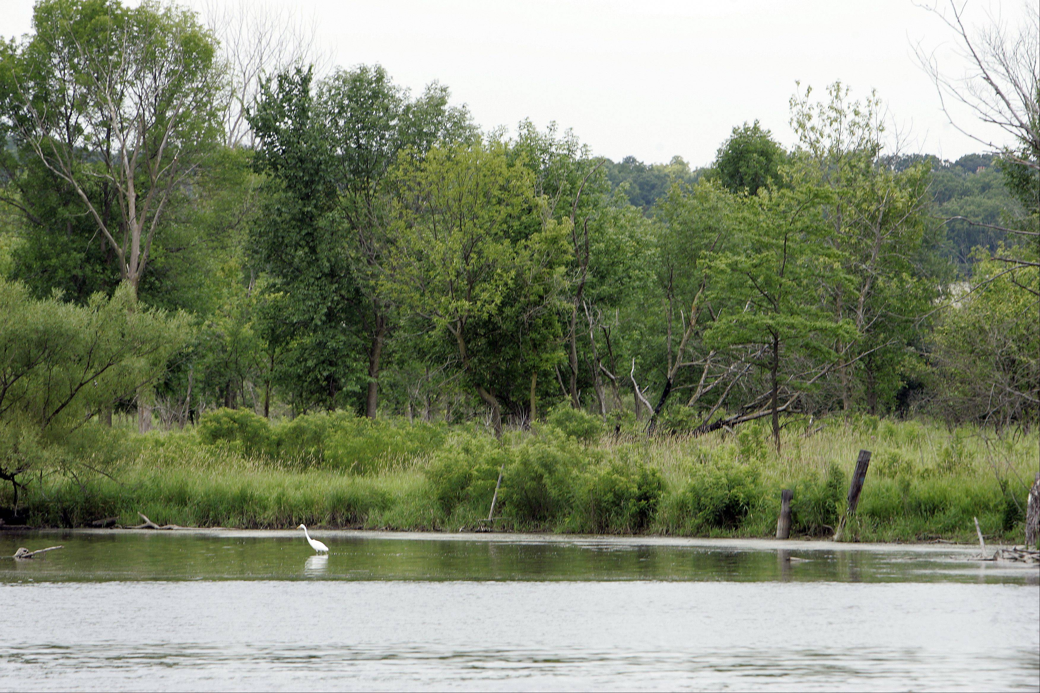 A view of the Fox River from Fox River Shores in Carpentersville.
