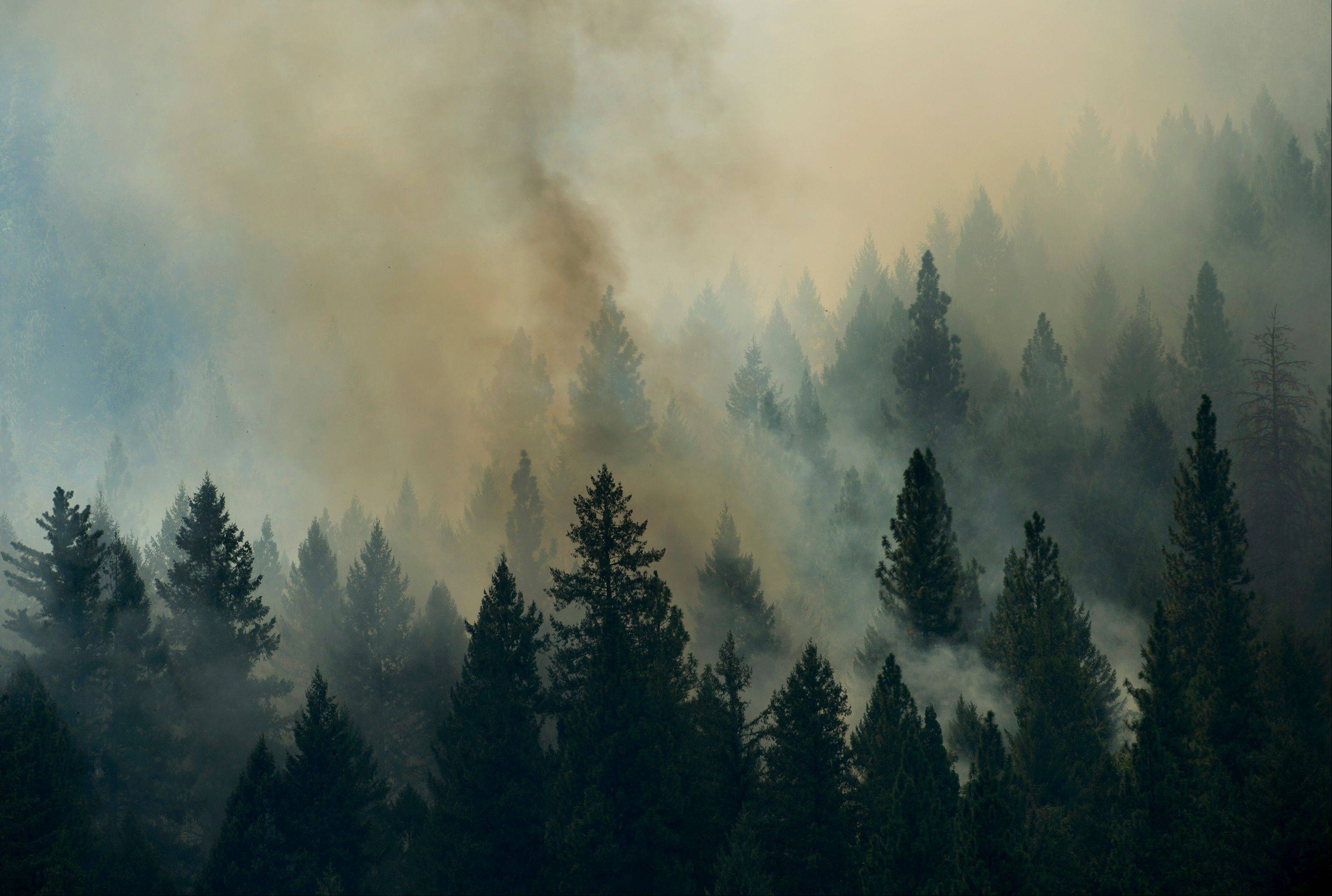 The Rim Fire burns in the Stanislaus National Forest this week, among 50 major uncontained fires burning across the western U.S.