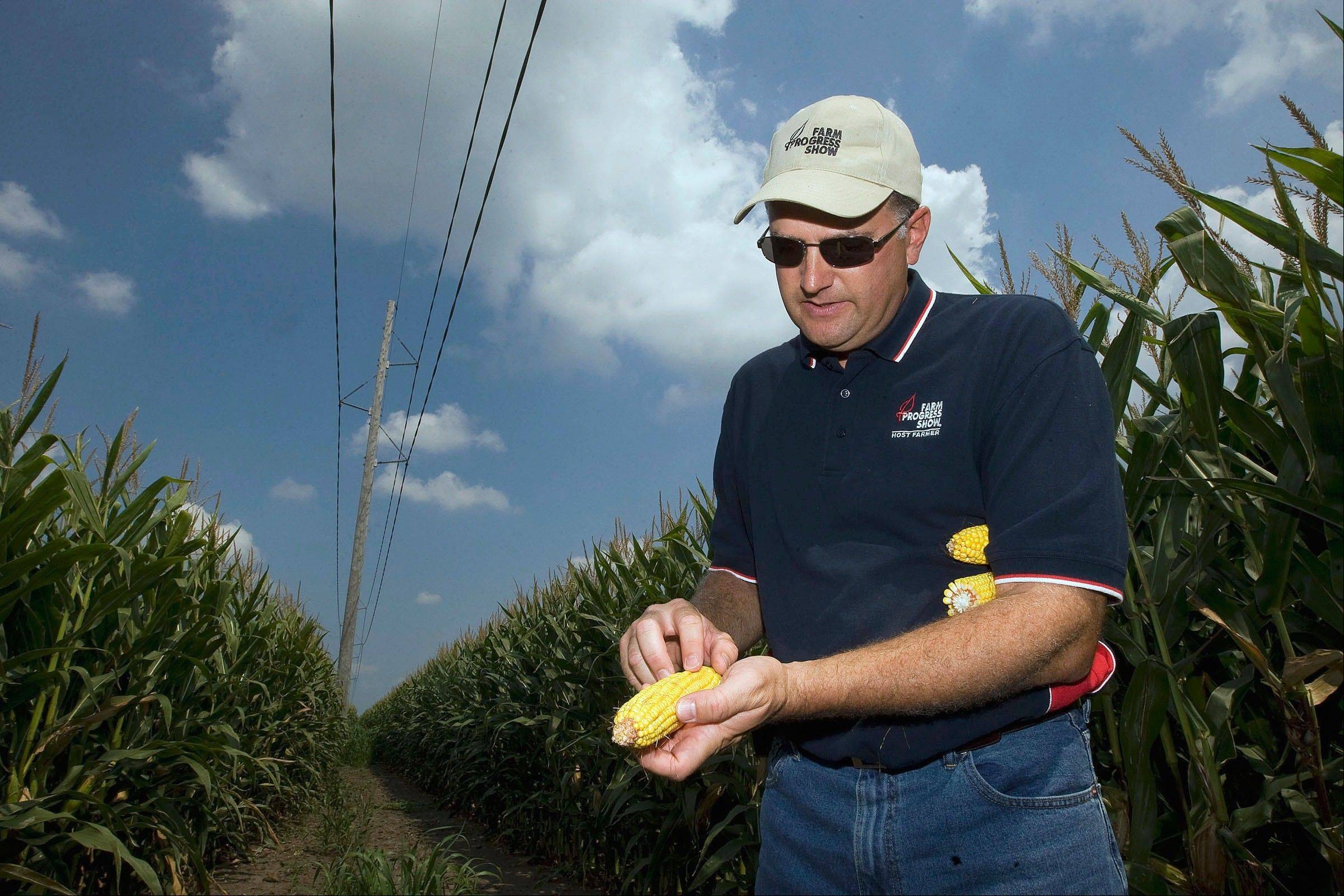 Farm Progress Show host farmer Marc Padrutt shows a sample from a demonstration field that has not matured enough for harvest in Decatur.