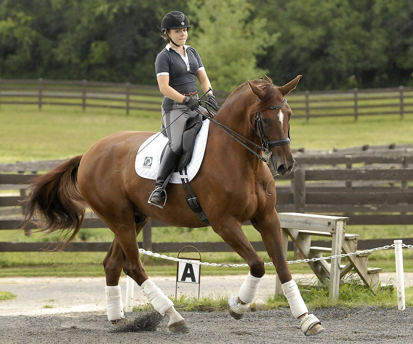Barrington High School senior Rosie Julian-Simoes and horse Proteus train at the Flying Dutchman Farm in Barrington Hills. She's among the country's top-ranked dressage competitors in her division and has Olympic aspirations.