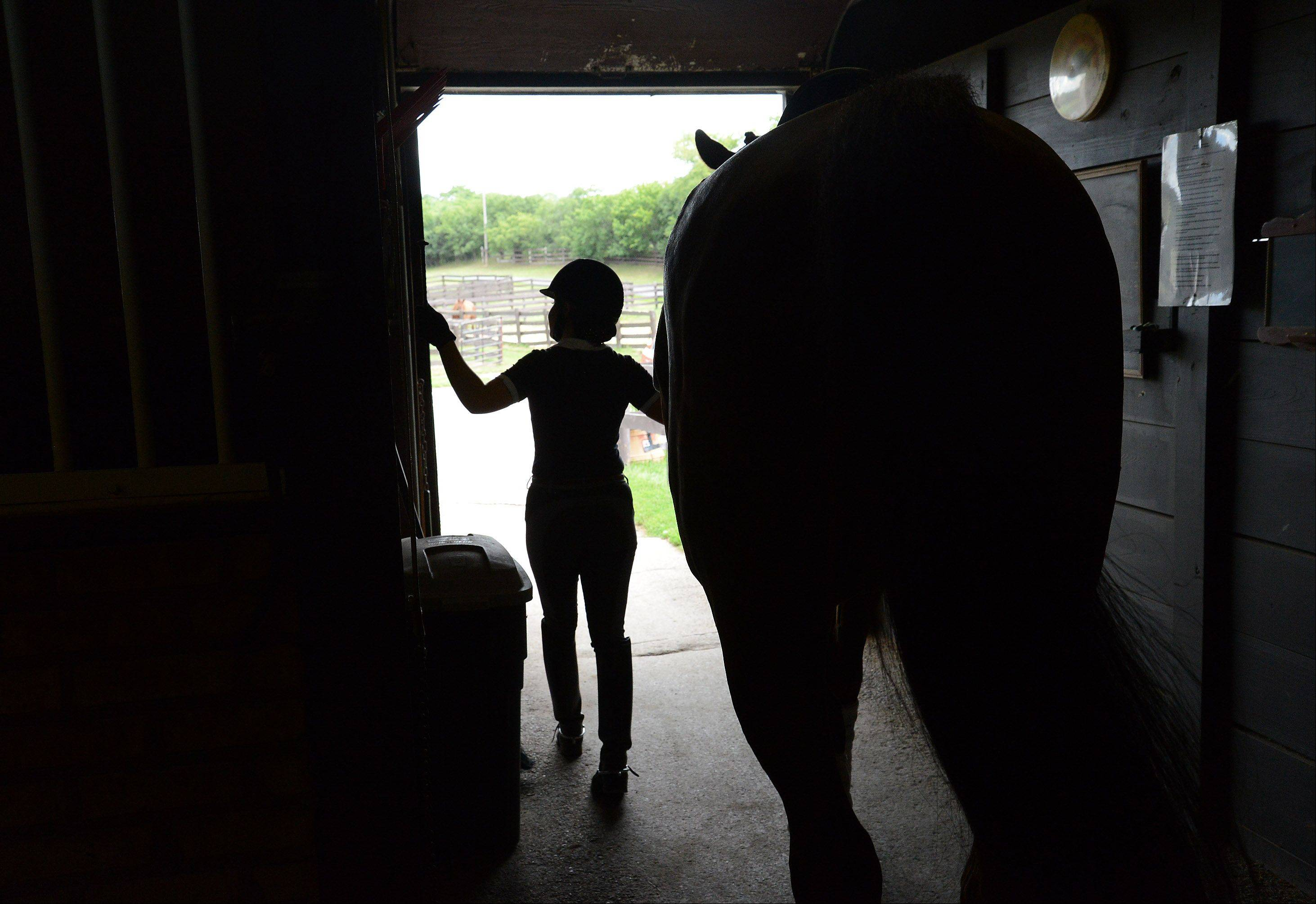 Barrington High School senior Rosie Julian-Simoes and horse Proteus head out of the stable for a training session at the Flying Dutchman Farm in Barrington Hills. Rosie is one of the country's top-ranked dressage competitors in her division and hopes to eventually compete internationally.