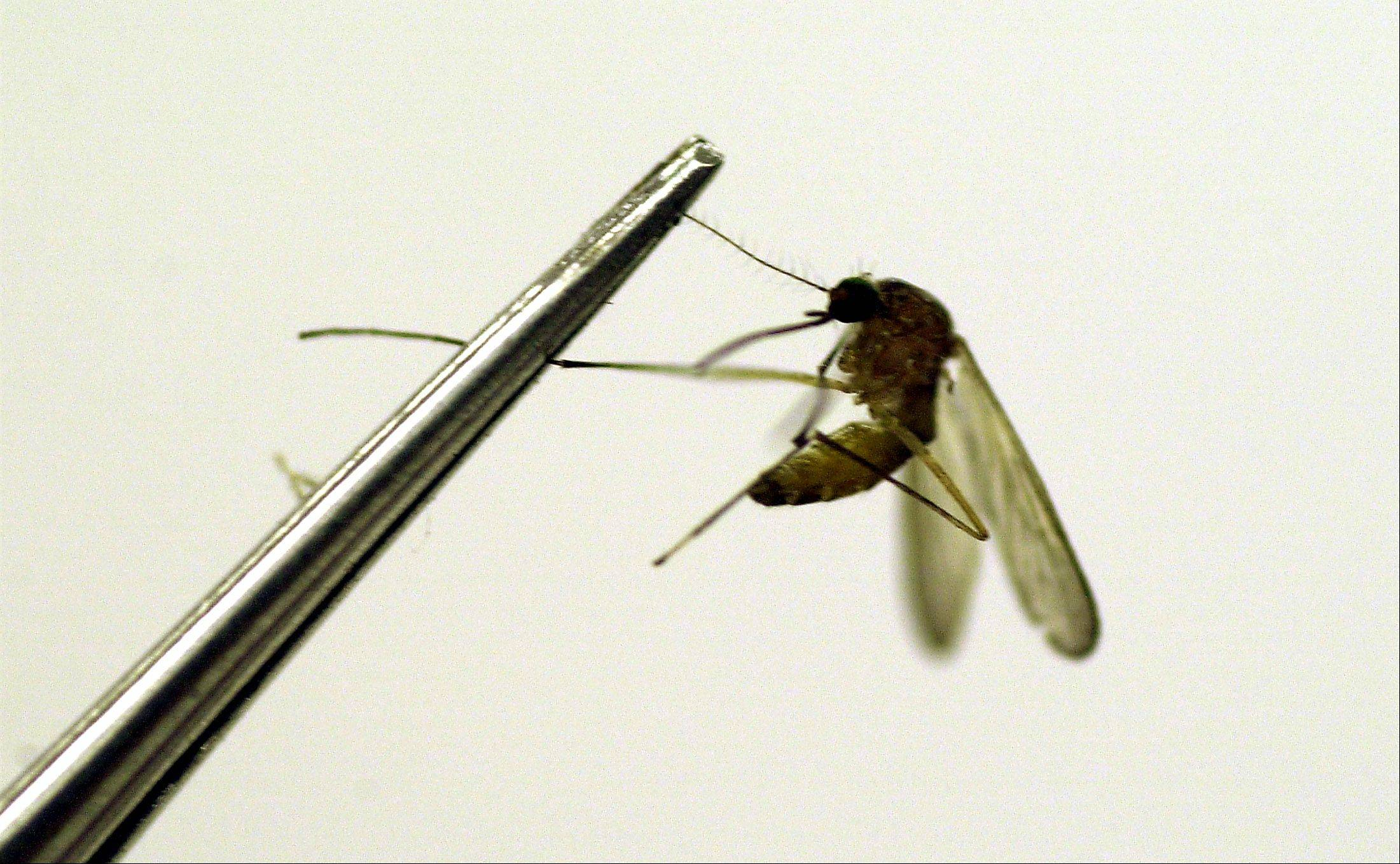 A mosquito is tested for the West Nile virus at a lab.
