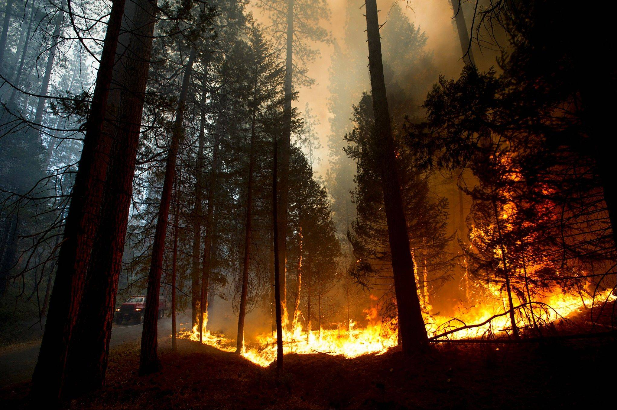 Fire rages out of control in the Stanislaus National Forest Thursday, Aug. 22, 2013, In California. A wildfire outside Yosemite National Park nearly quadrupled in size Thursday, prompting officers to warn residents in a gated community to evacuate their homes and leading scores of tourists to leave the area during peak season.
