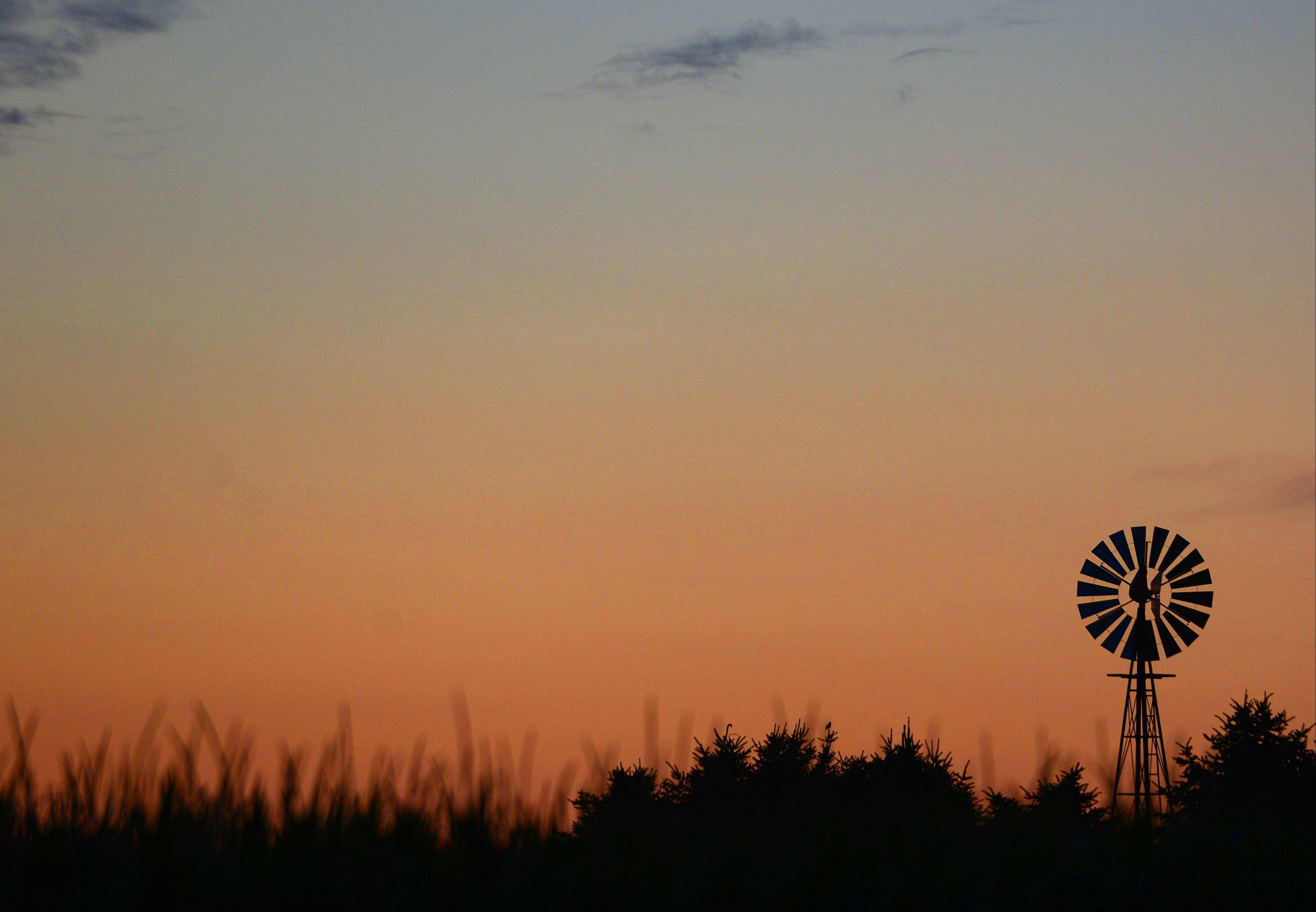 A windmill is seen beyond a field of corn at the Engel farm in Hampshire.