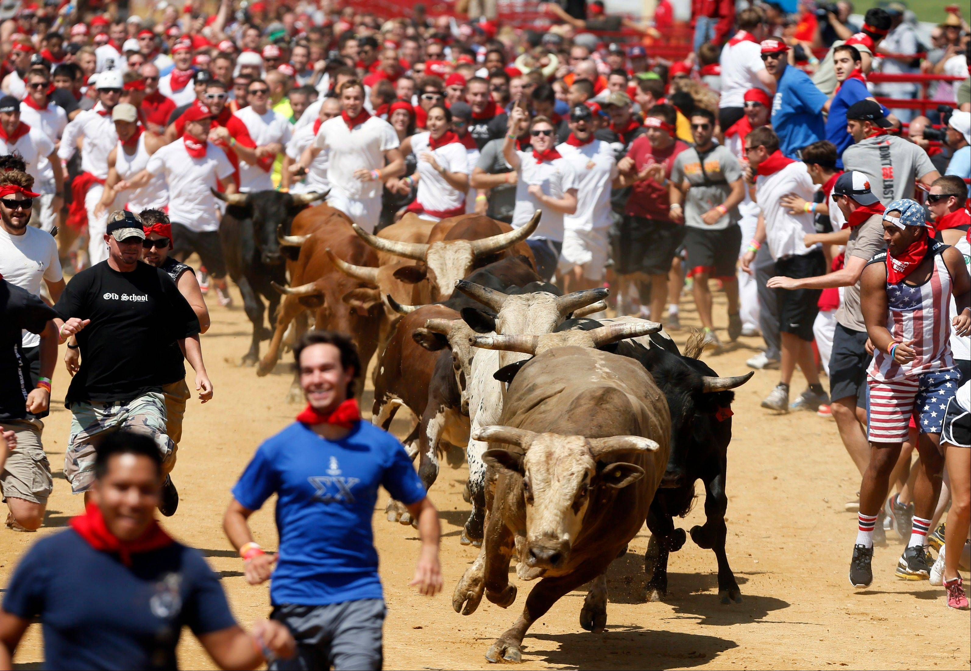 Runners clear out in front of the bulls Saturday during The Great Bull Run event at the Virginia Motorsports Park in Dinwiddie, Va.