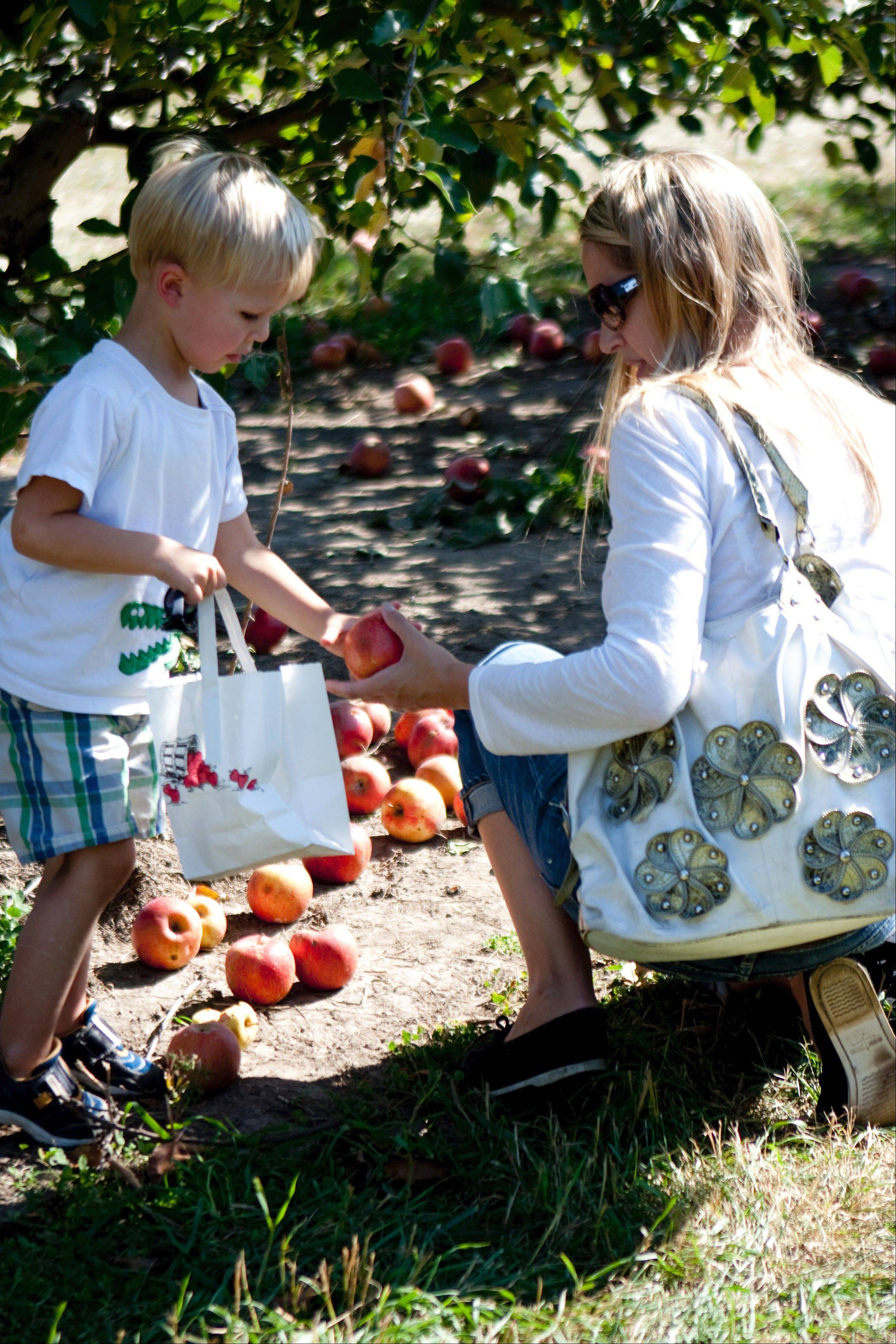 Visiting an apple orchard in the fall is a tradition for some families.