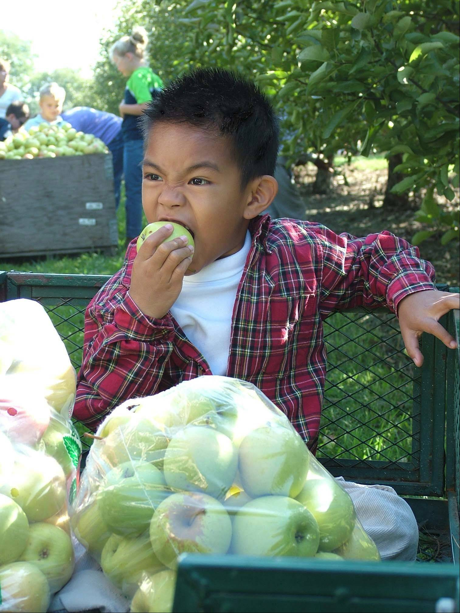 A youngster enjoys the fruit of his labor.