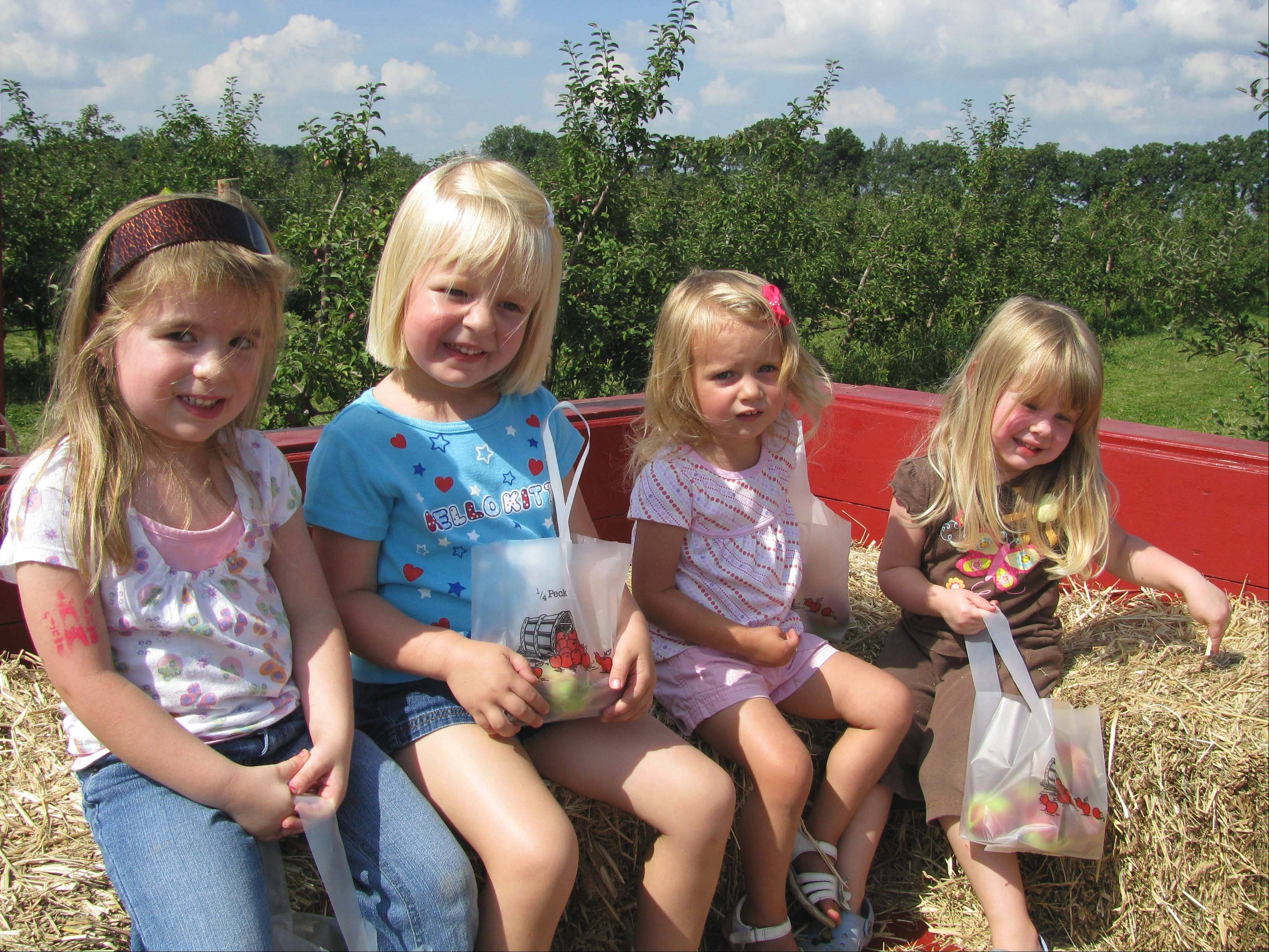 A wagon tour is part of the fun of apple picking at the Royal Oak Farm Orchard in Harvard.