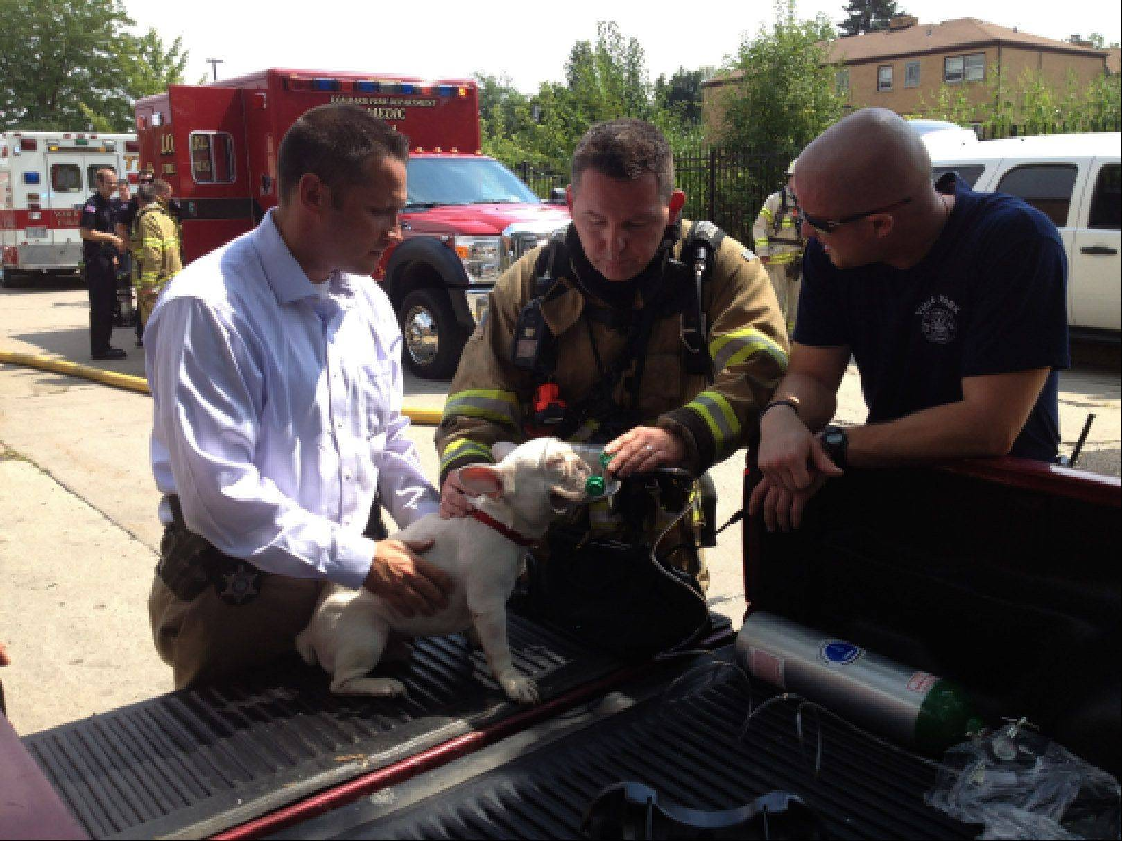 Firefighters treat a dog they rescued from a burning apartment building Monday afternoon in Villa Park.