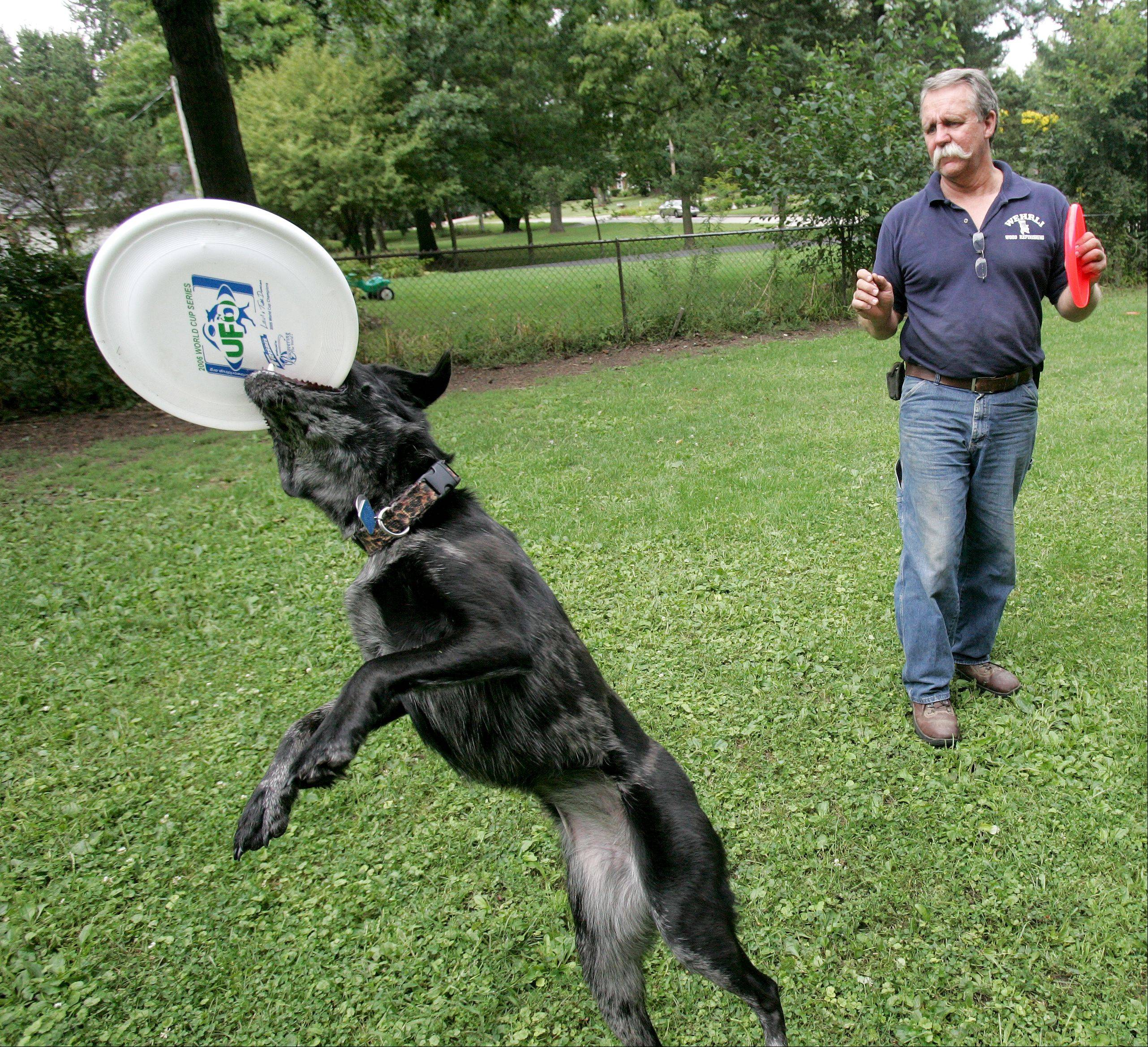 The Ashley Whippet Invitational World Championship Qualifier beginning at 9:30 a.m. Sunday, Sept. 1, and the Windy City K9 Classic beginning at 9:30 a.m. Saturday, Aug. 31, are Last Fling events open to man, woman and dog.