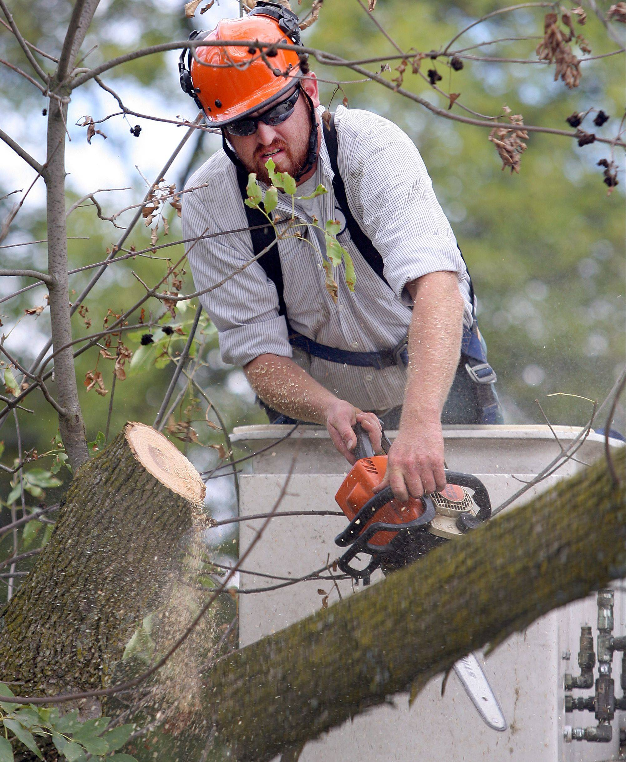 An estimated 350 to 400 ash trees have been removed in Libertyville since the emerald ash borer was confirmed in June 2010.