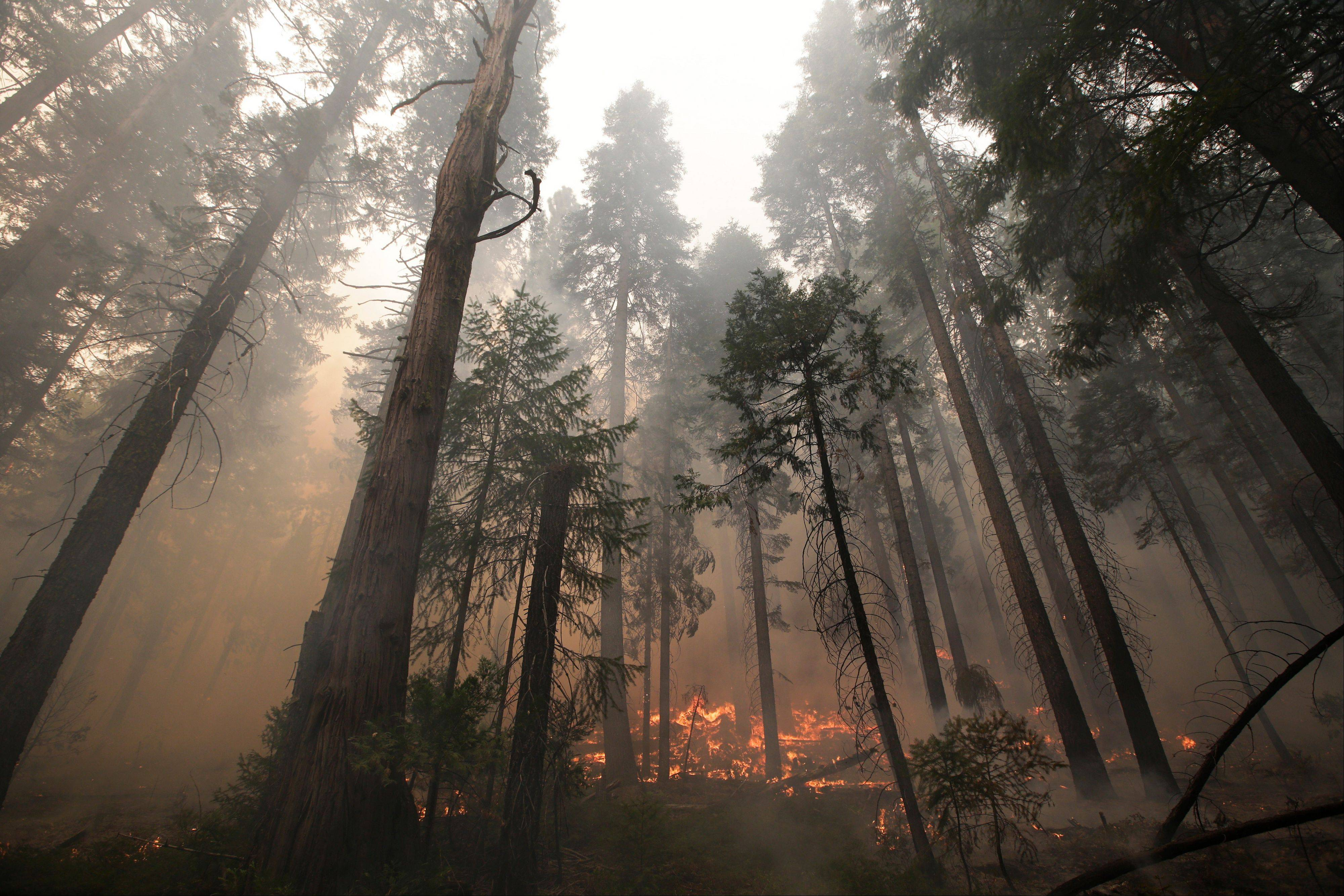 The Rim Fire burns through trees near Yosemite National Park, Calif., on Tuesday, Aug. 27, 2013.